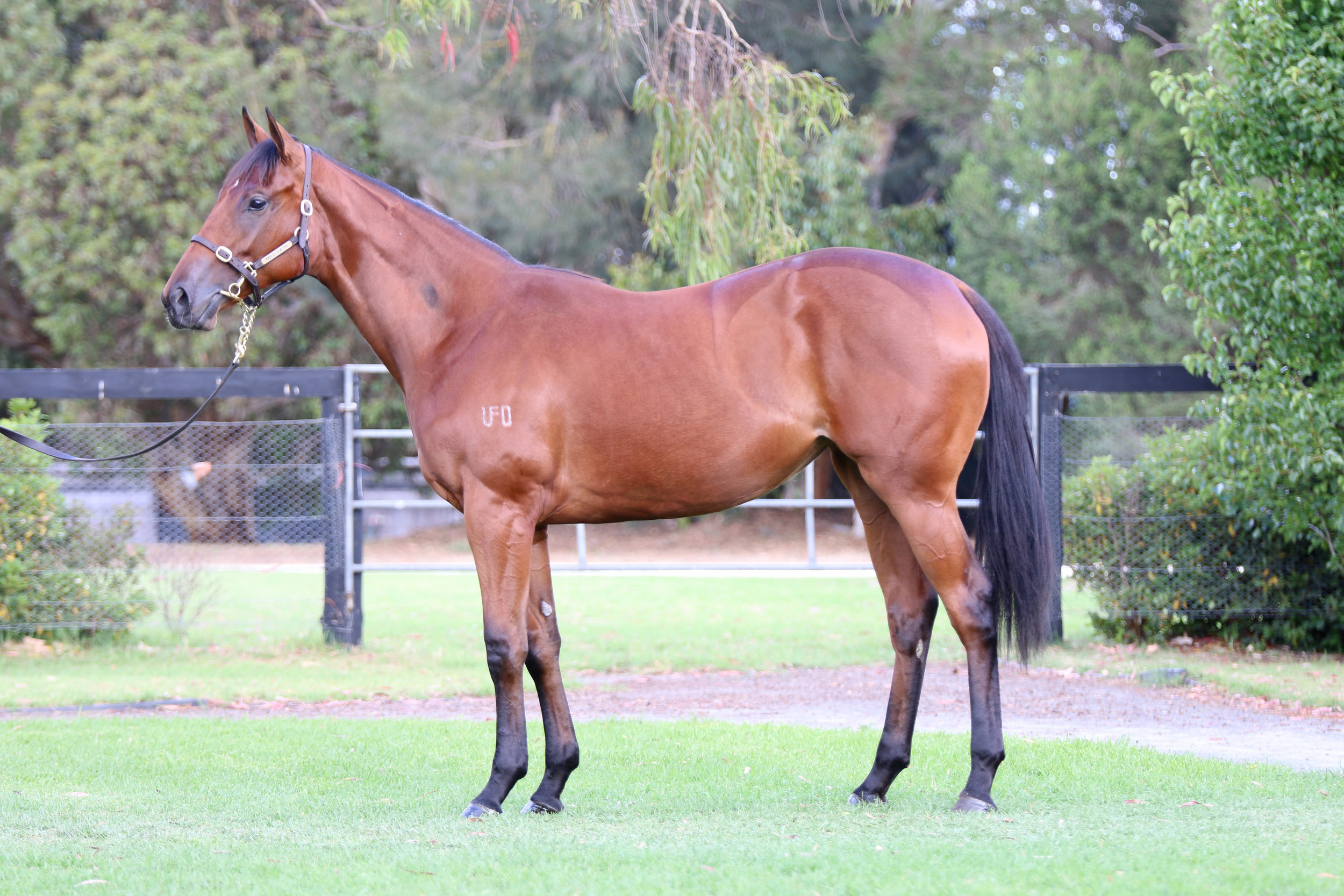 Lot 870: Written Tycoon x Obsidian Dragon filly sold for $300,000