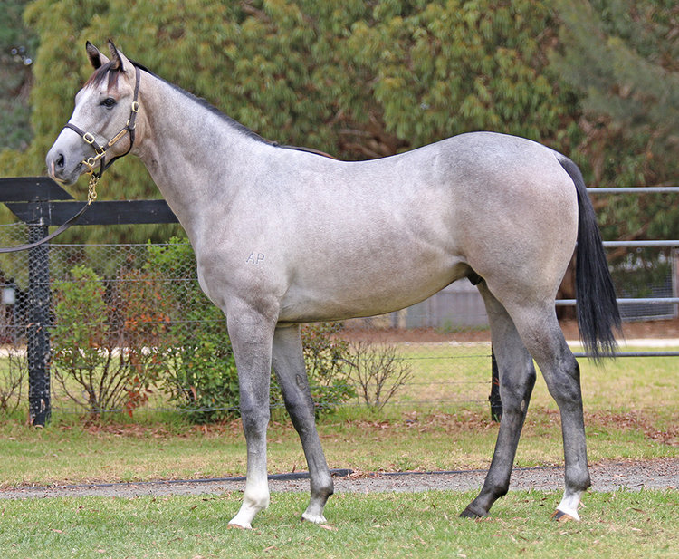 Lot 61 Toronado x Bahamas colt_low.jpg