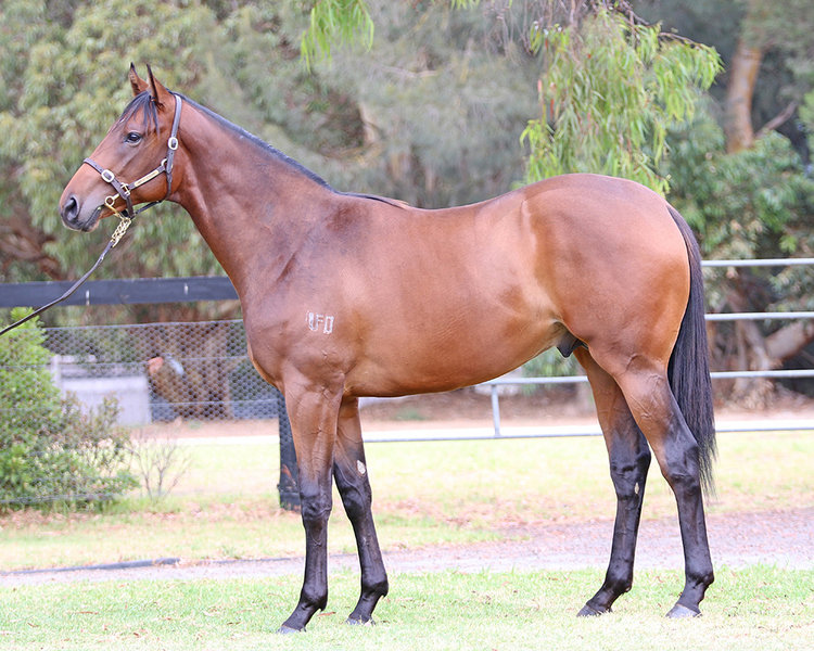 Lot 157 So You Think x Eagles Destiny colt_low.jpg