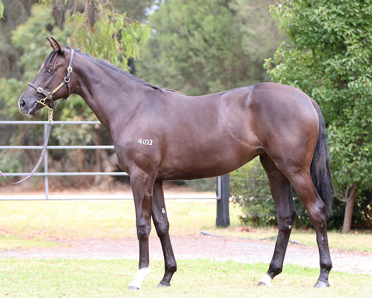 Lot 182 Foxwedge x Family Portrait filly_low.jpg