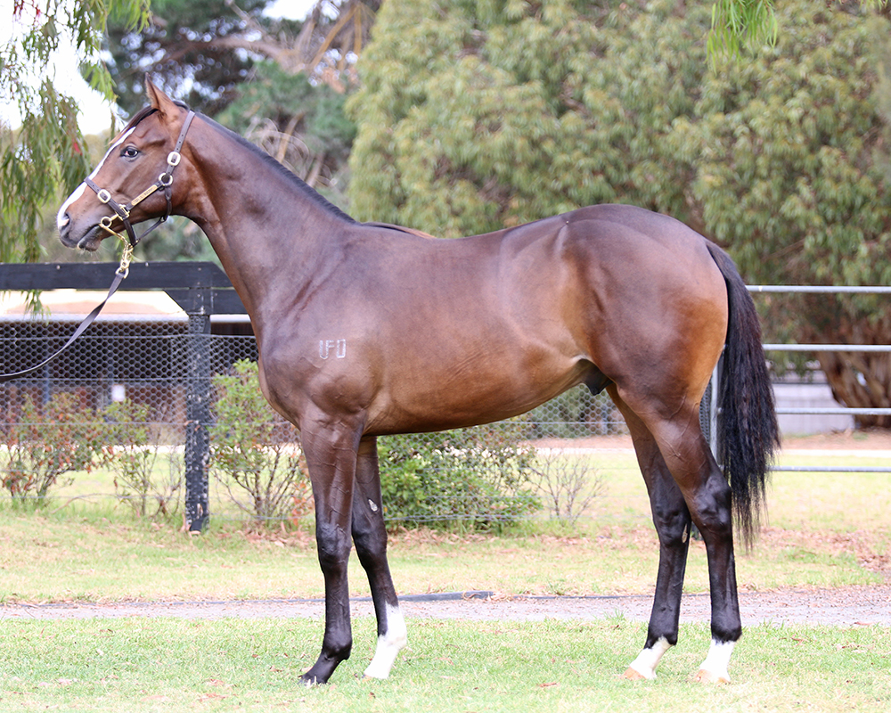 Lot 495 Free Eagle x Third Day filly_low.jpg