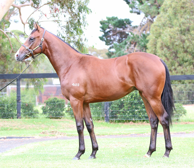 Crown Towers as a yearling