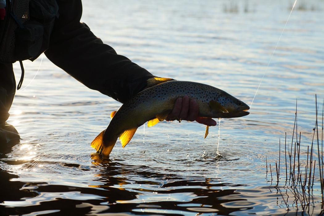 fish-0741.jpg