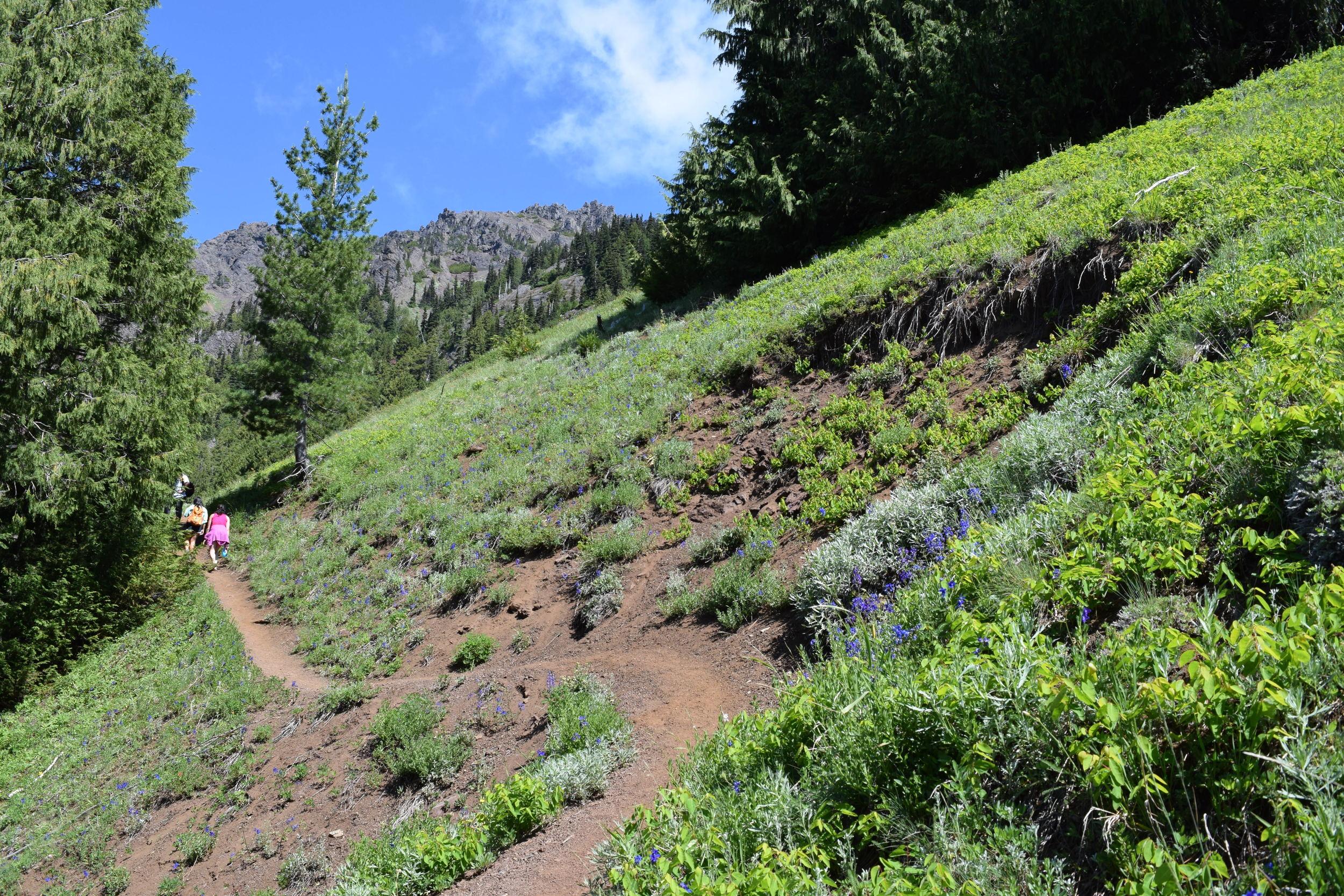 Switchback Trail.jpg