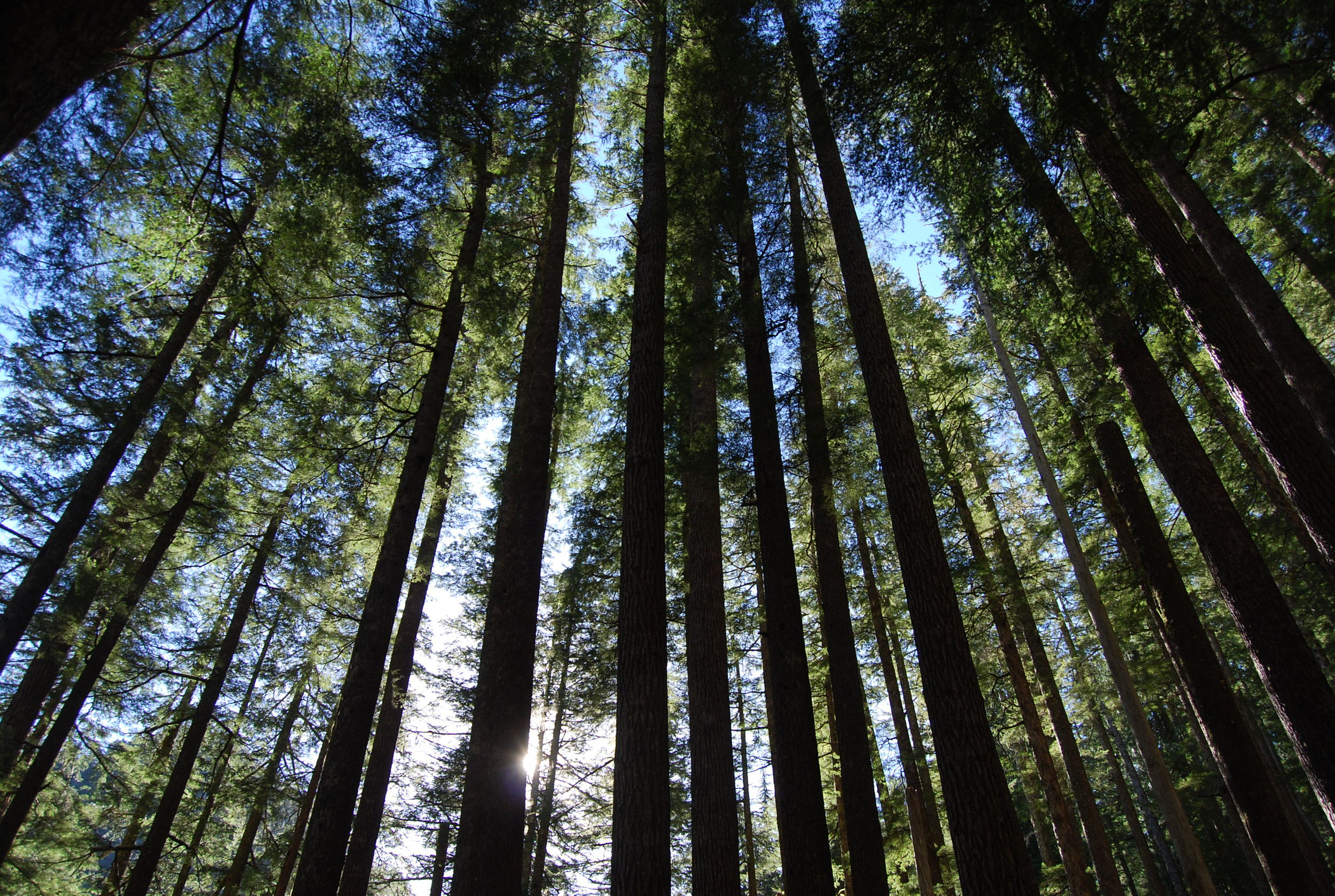 Sol Duc Forest.jpg