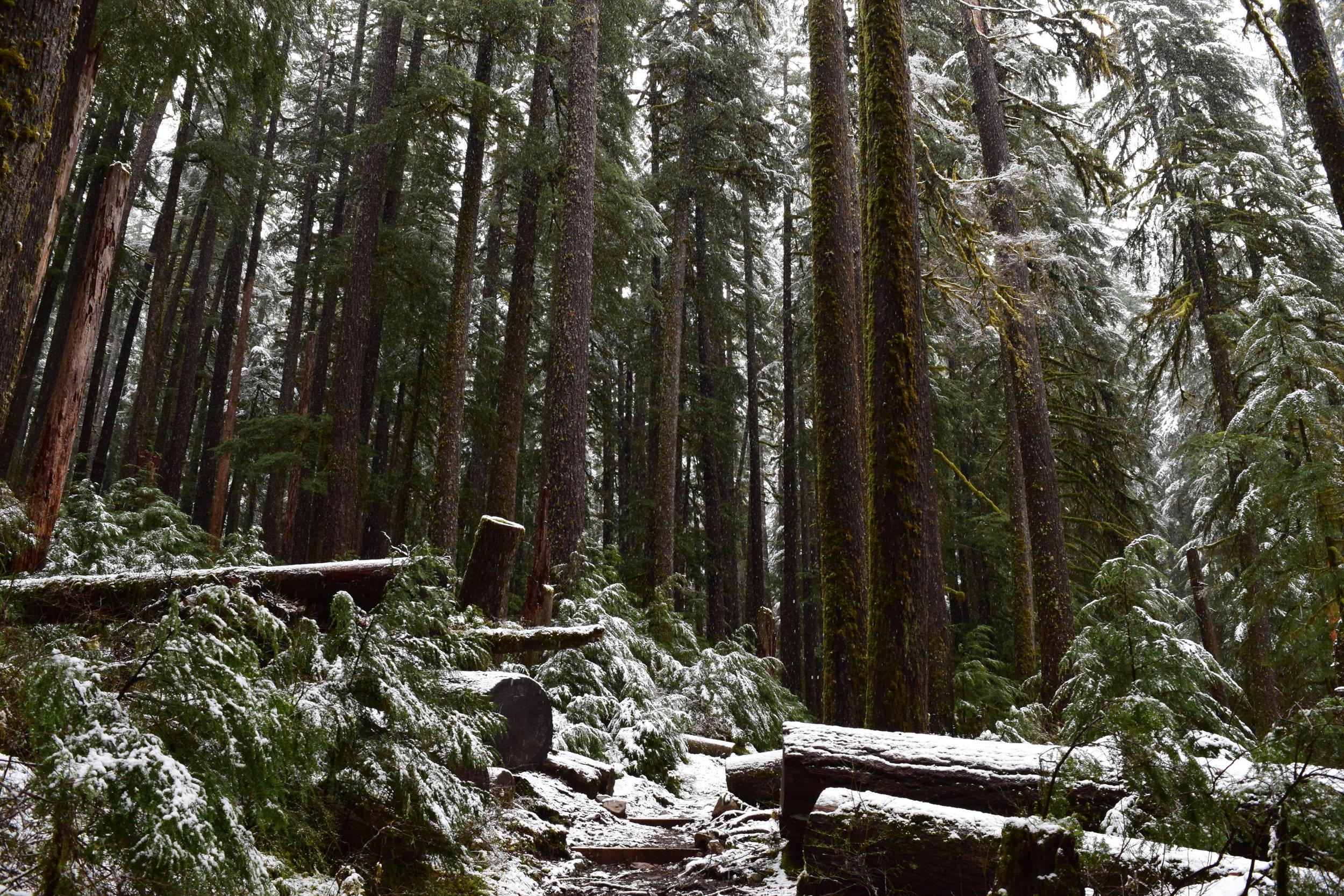 Sol Duc Trail #1