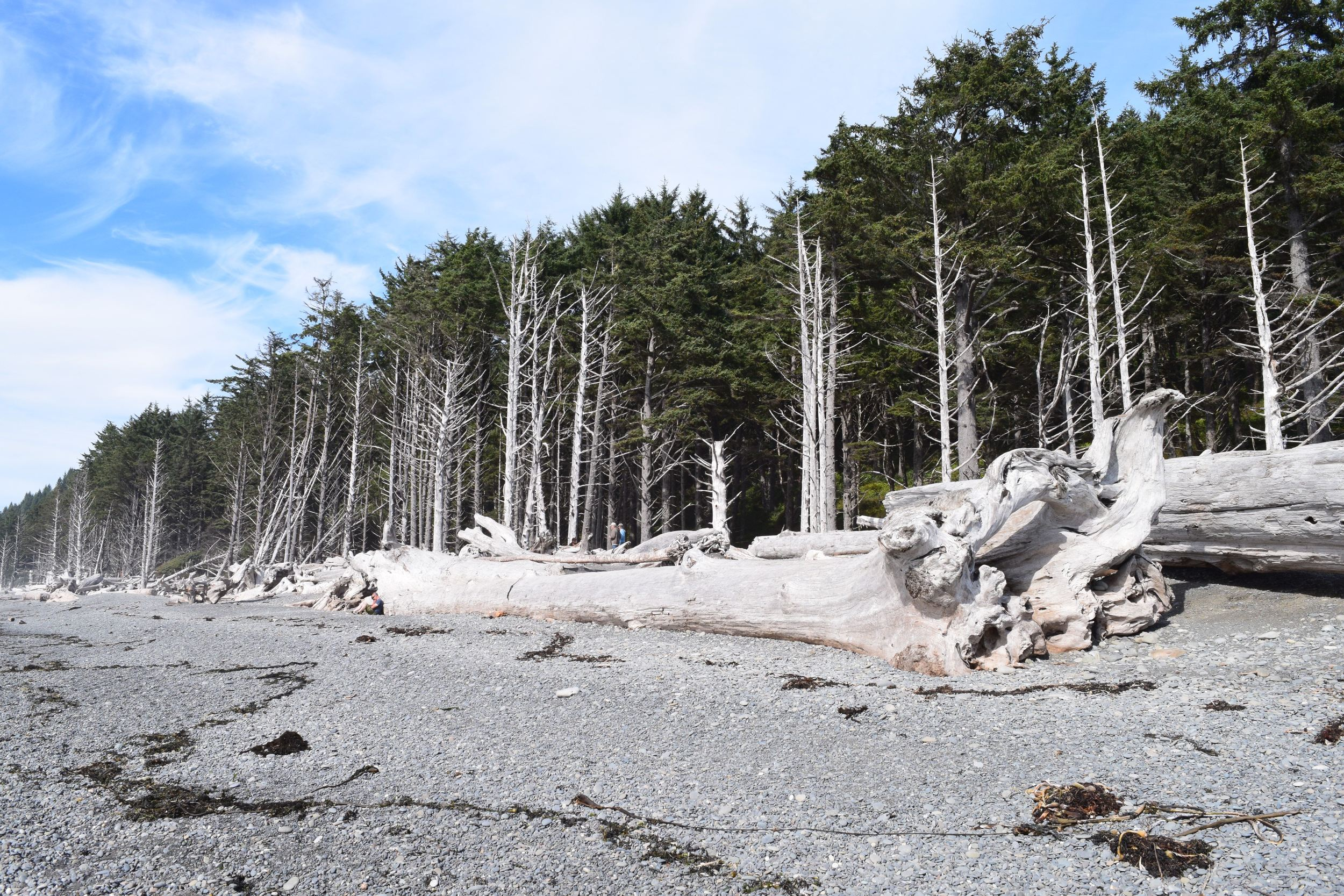 Forest Meets the Sea.jpg