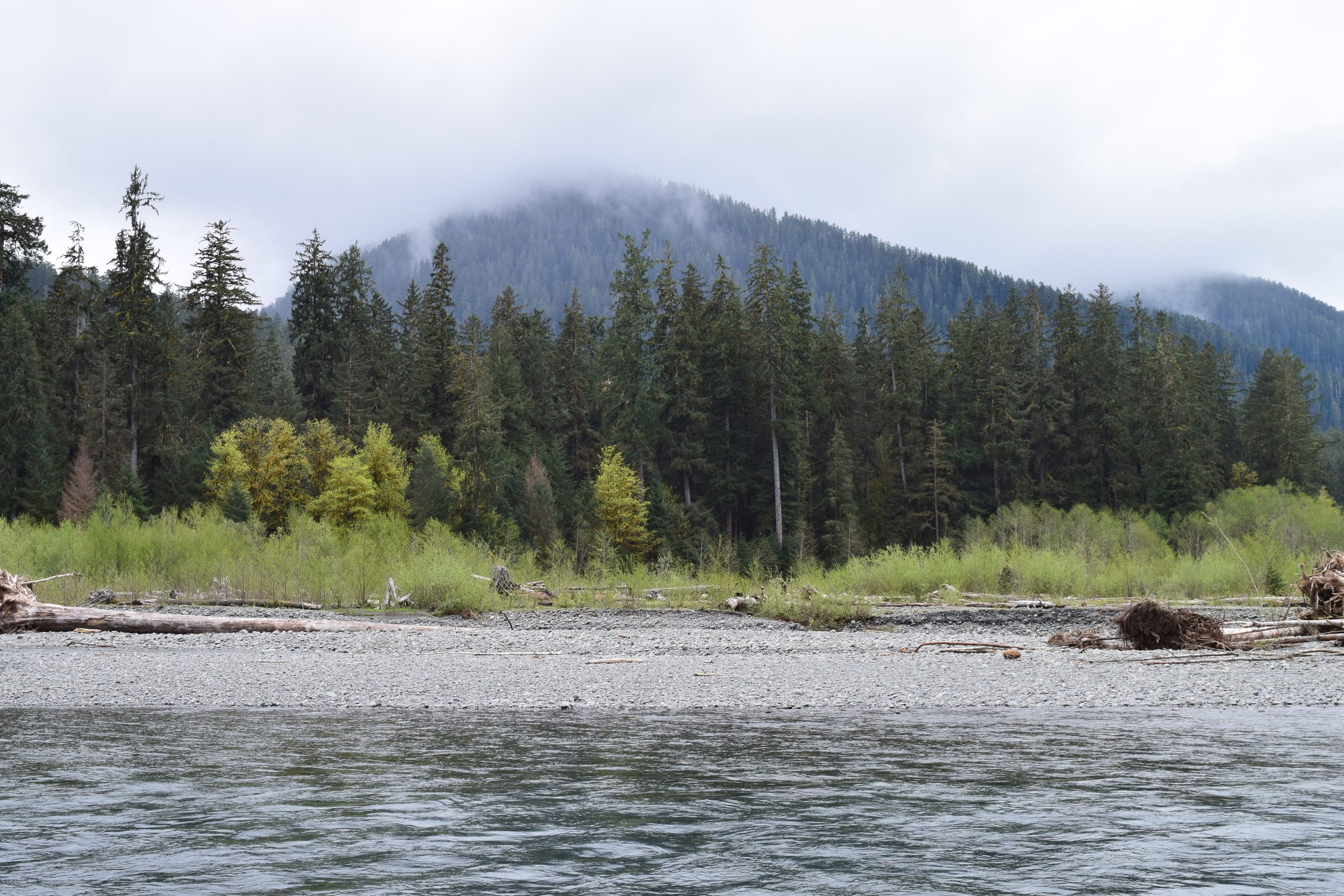 Hoh River Trail.jpg