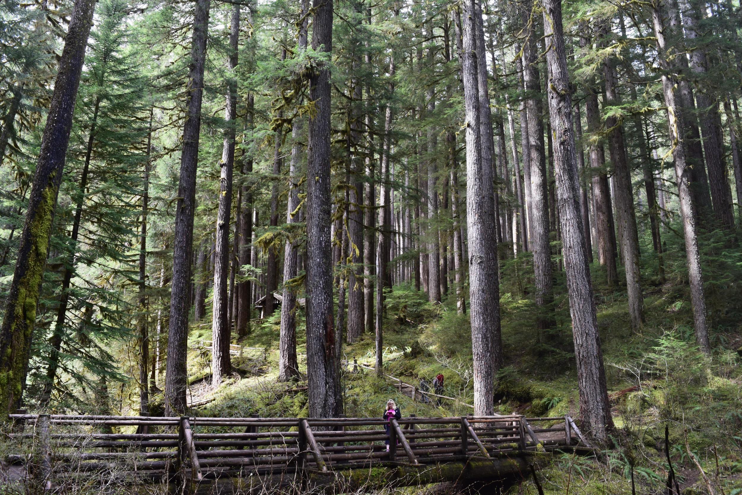 Sol Duc Valley Forest.jpg