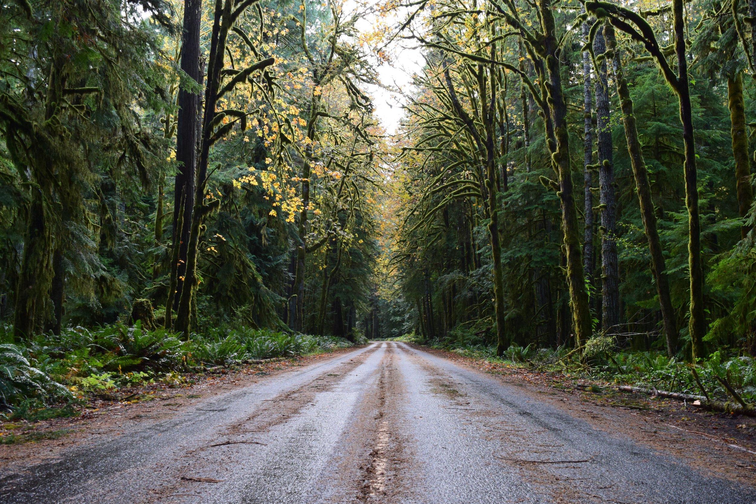 Road to Lake Crescent Lodge