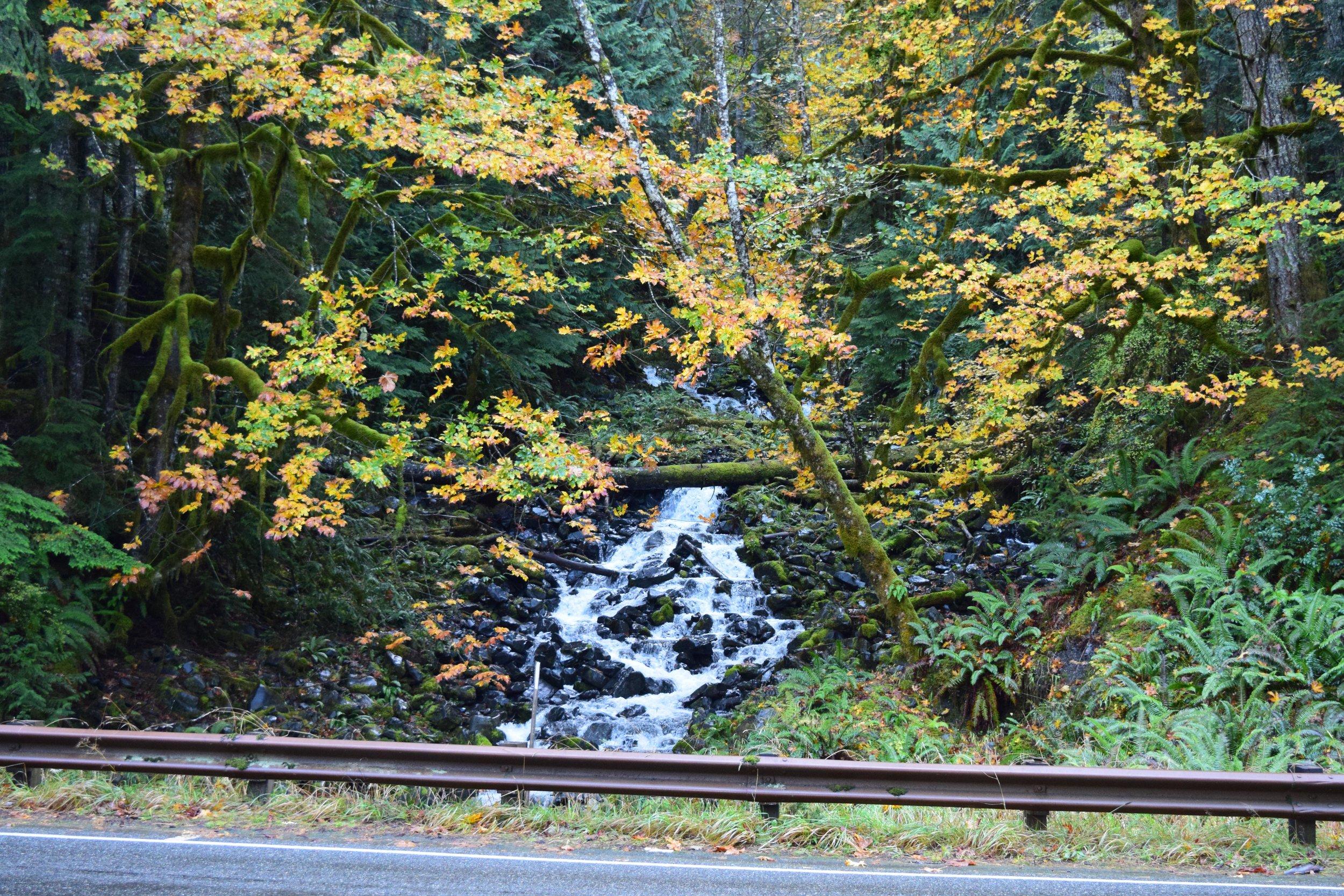 Roadside Waterfall along Lake Crescent!