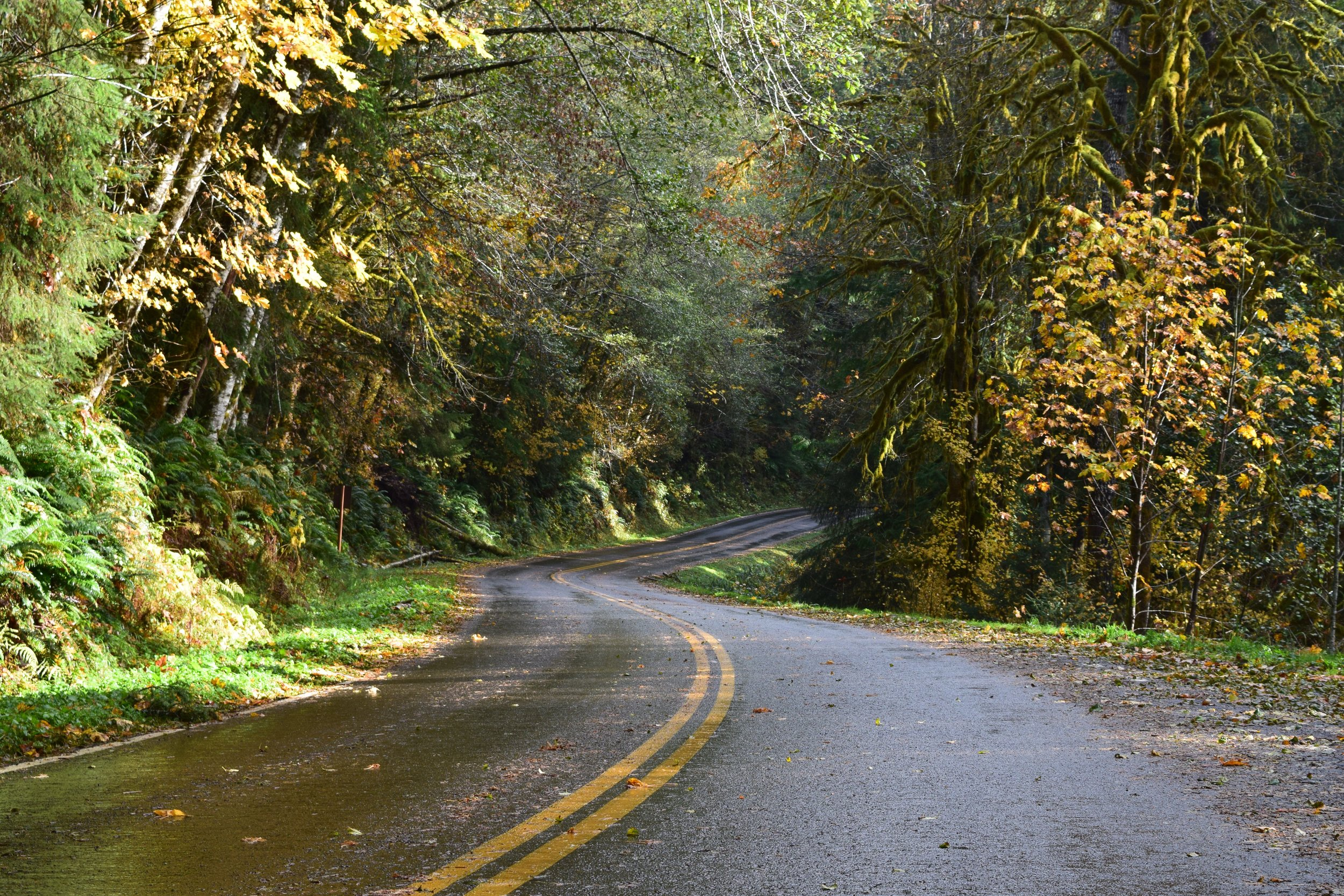 The Road into the Sol Duc Valley