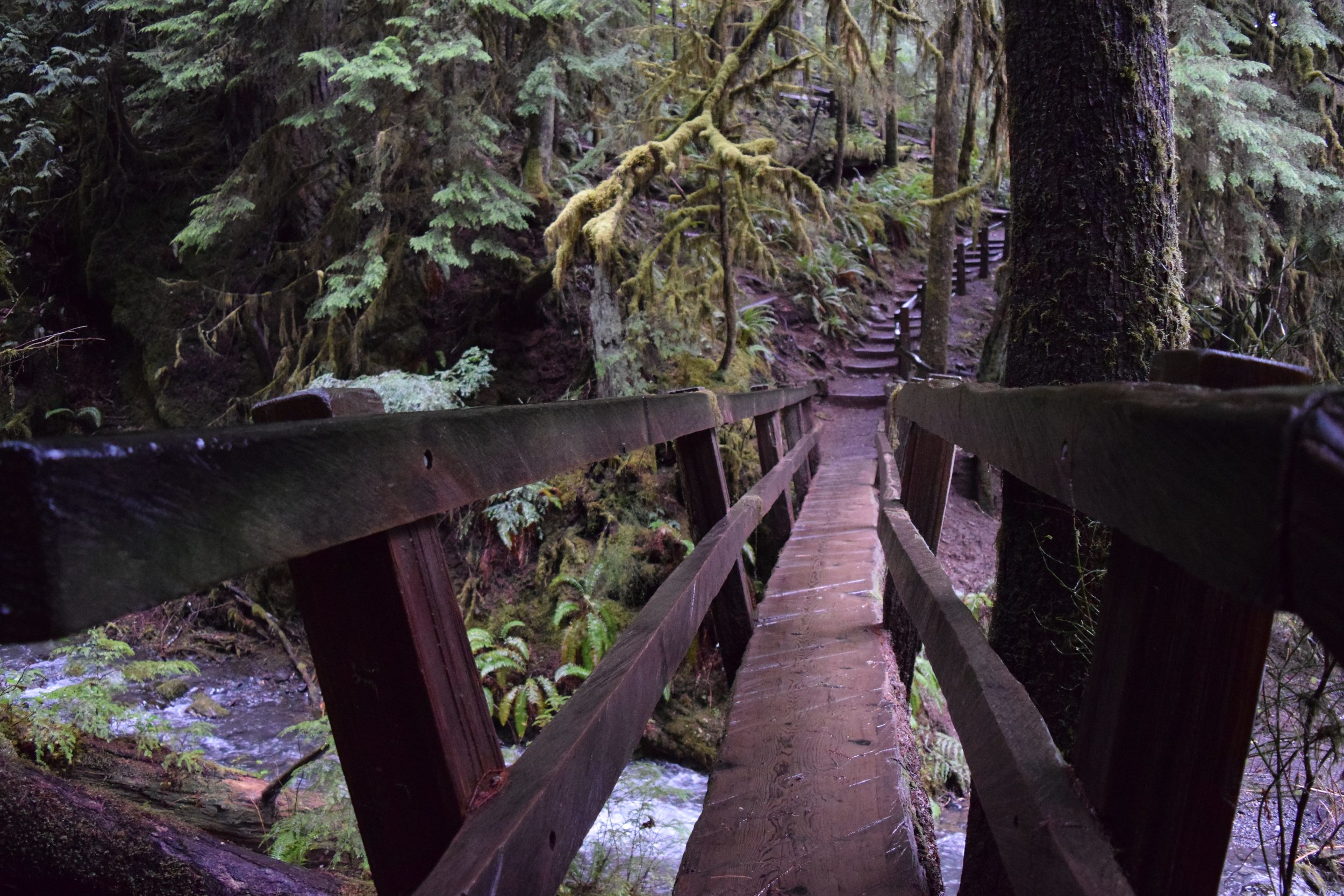 A rustic nature bridge leading to a higher viewpoint