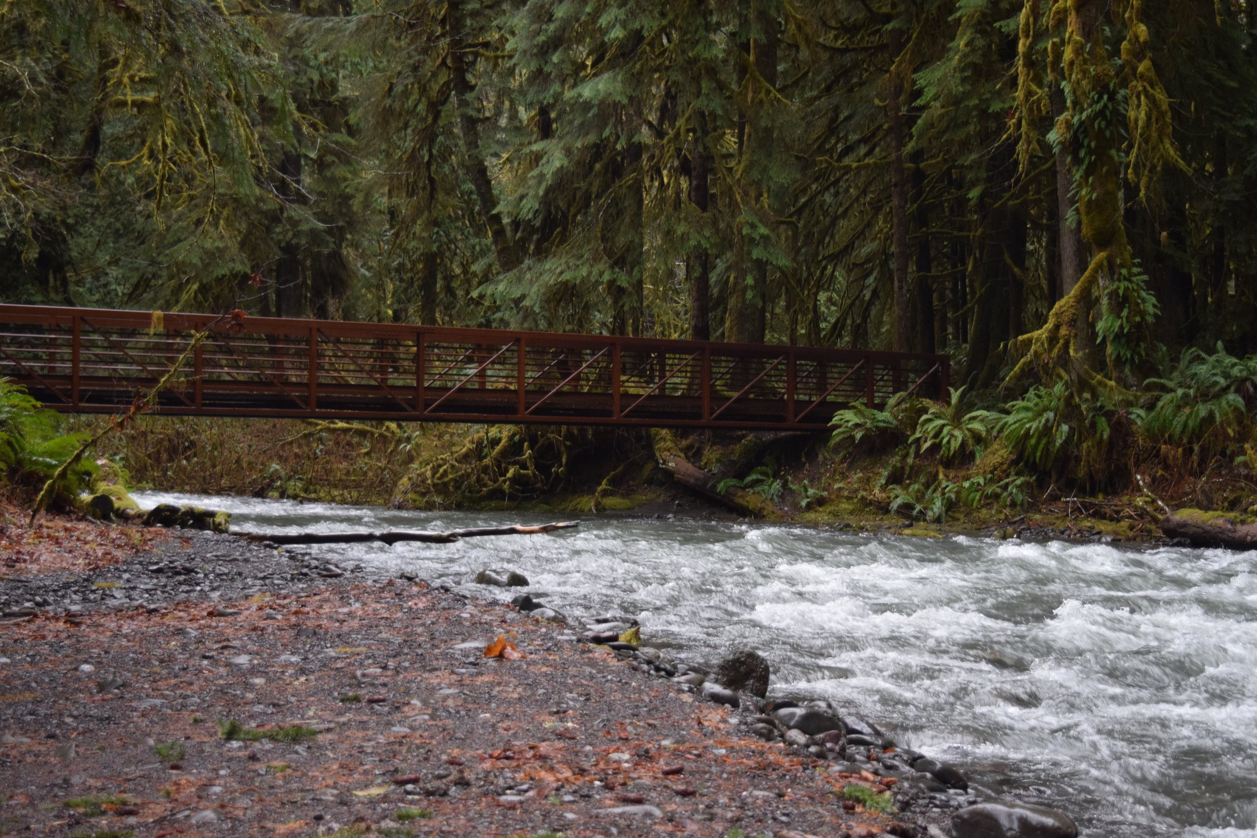 A scenic, forested hike to the falls