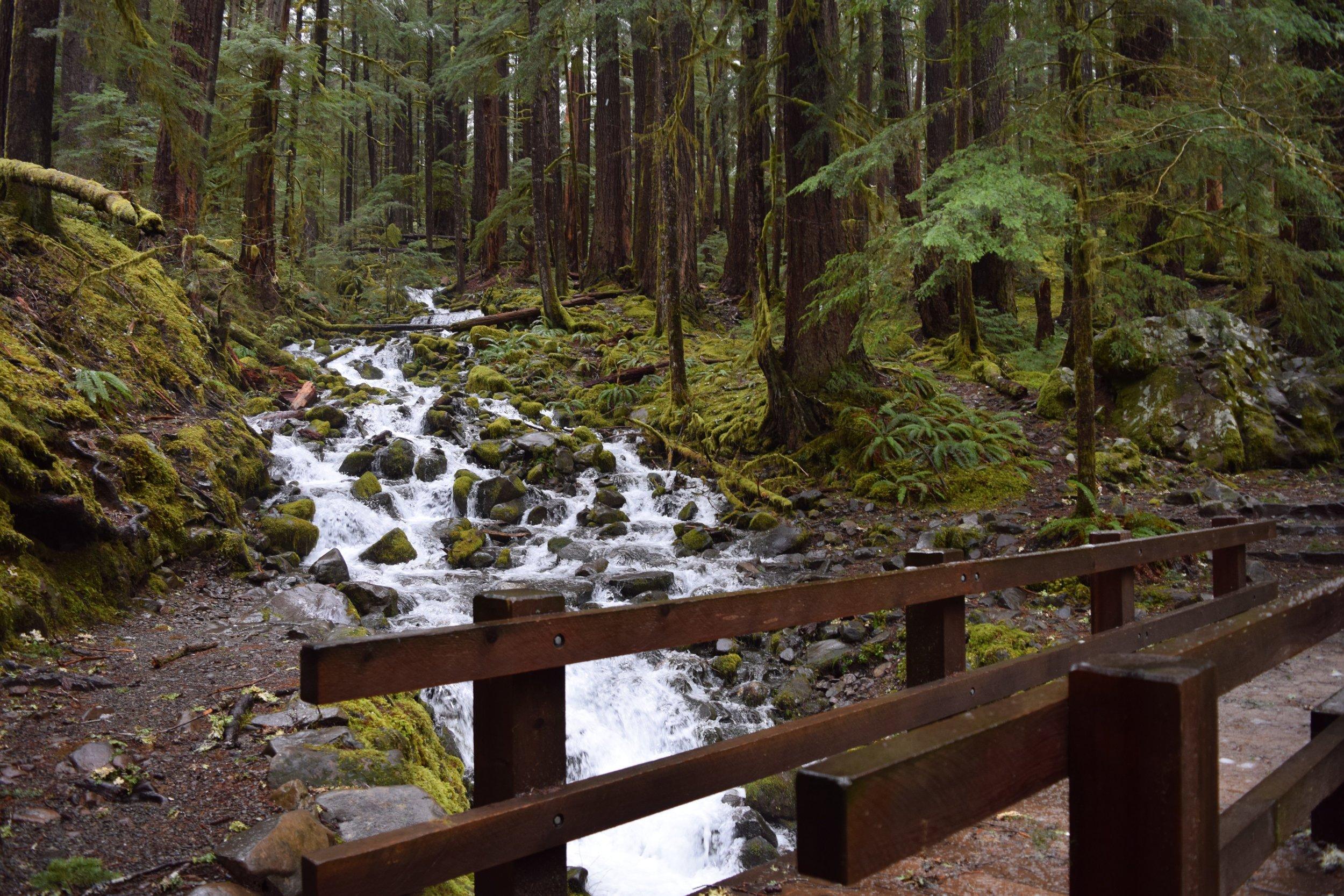 First nature bridge crossing