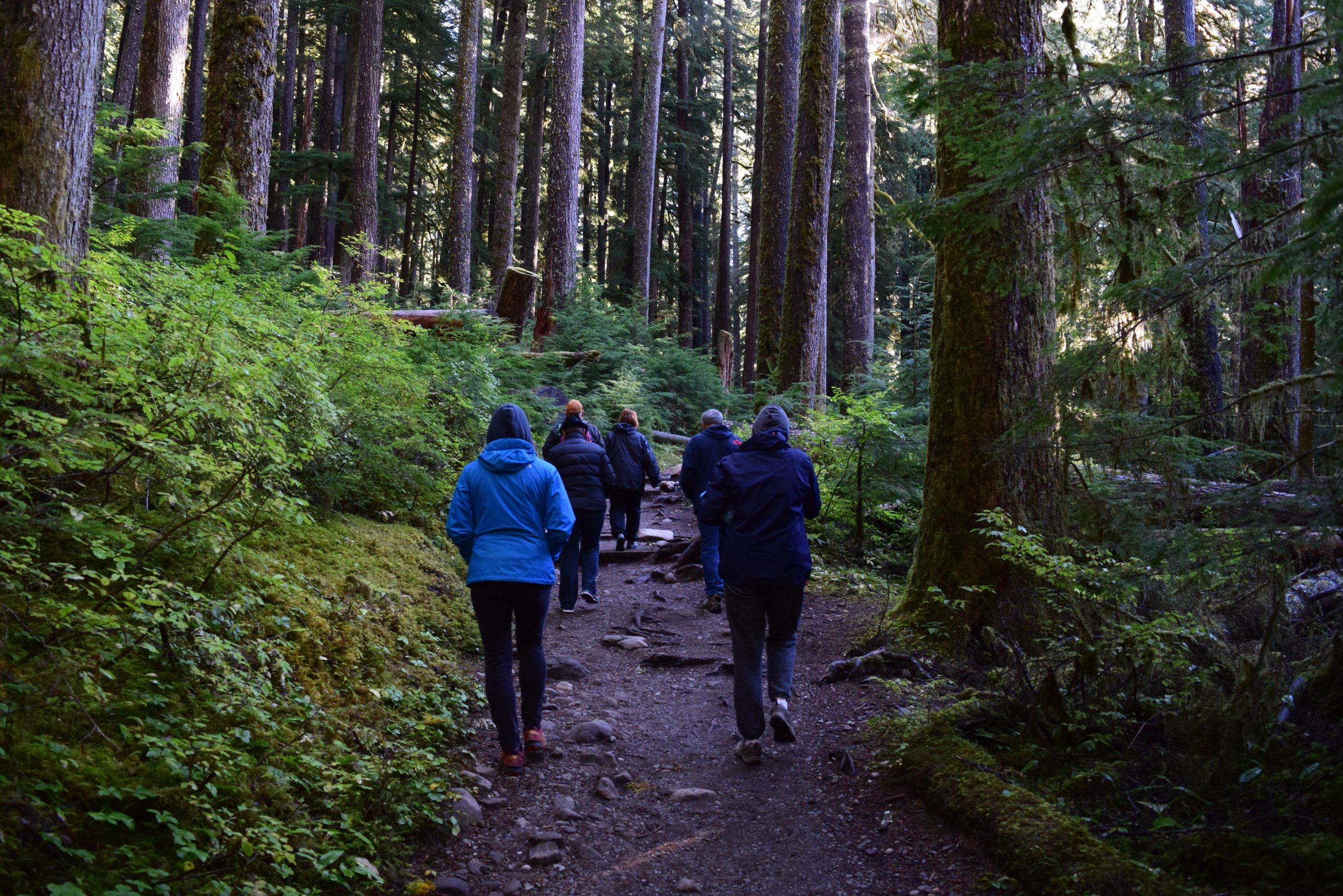 Hiking through the old growth forest