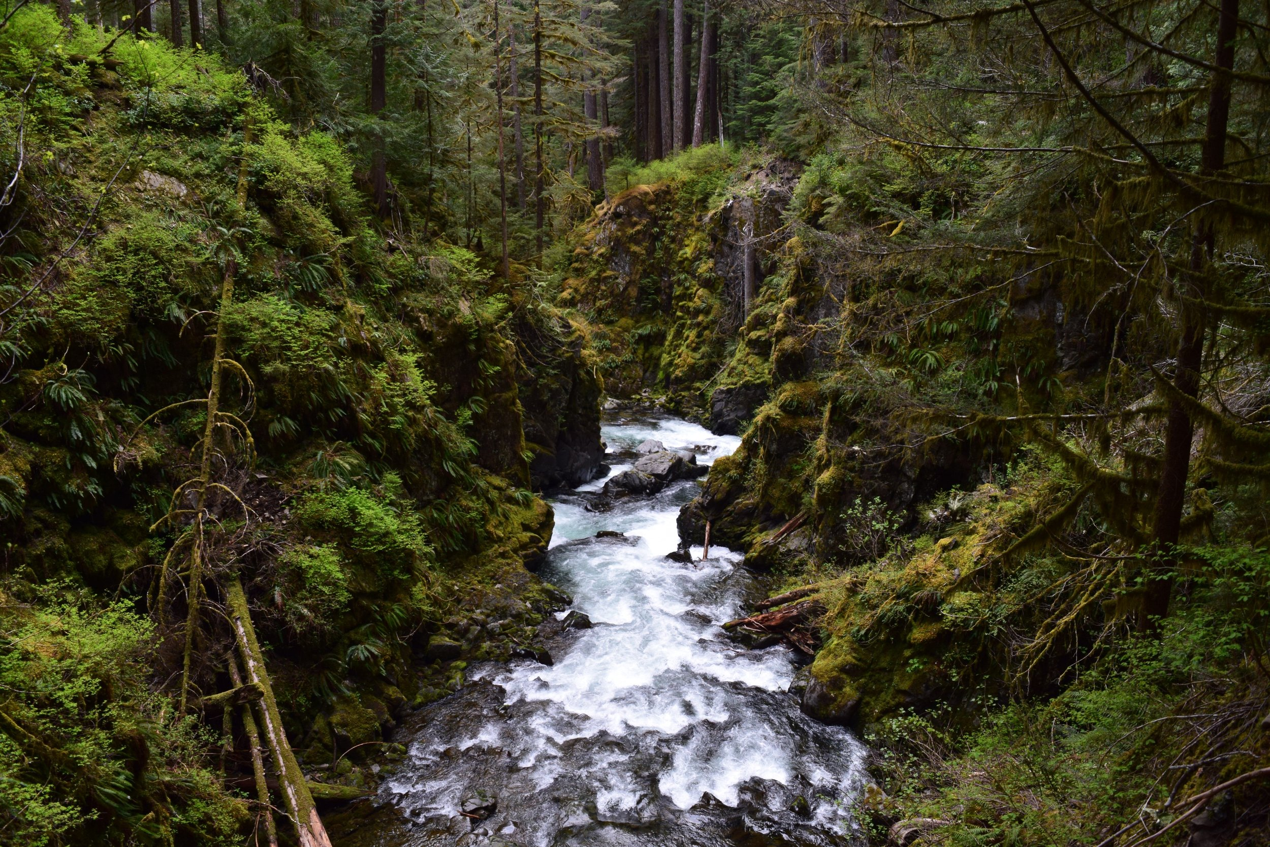The picturesque Sol Duc River Valley