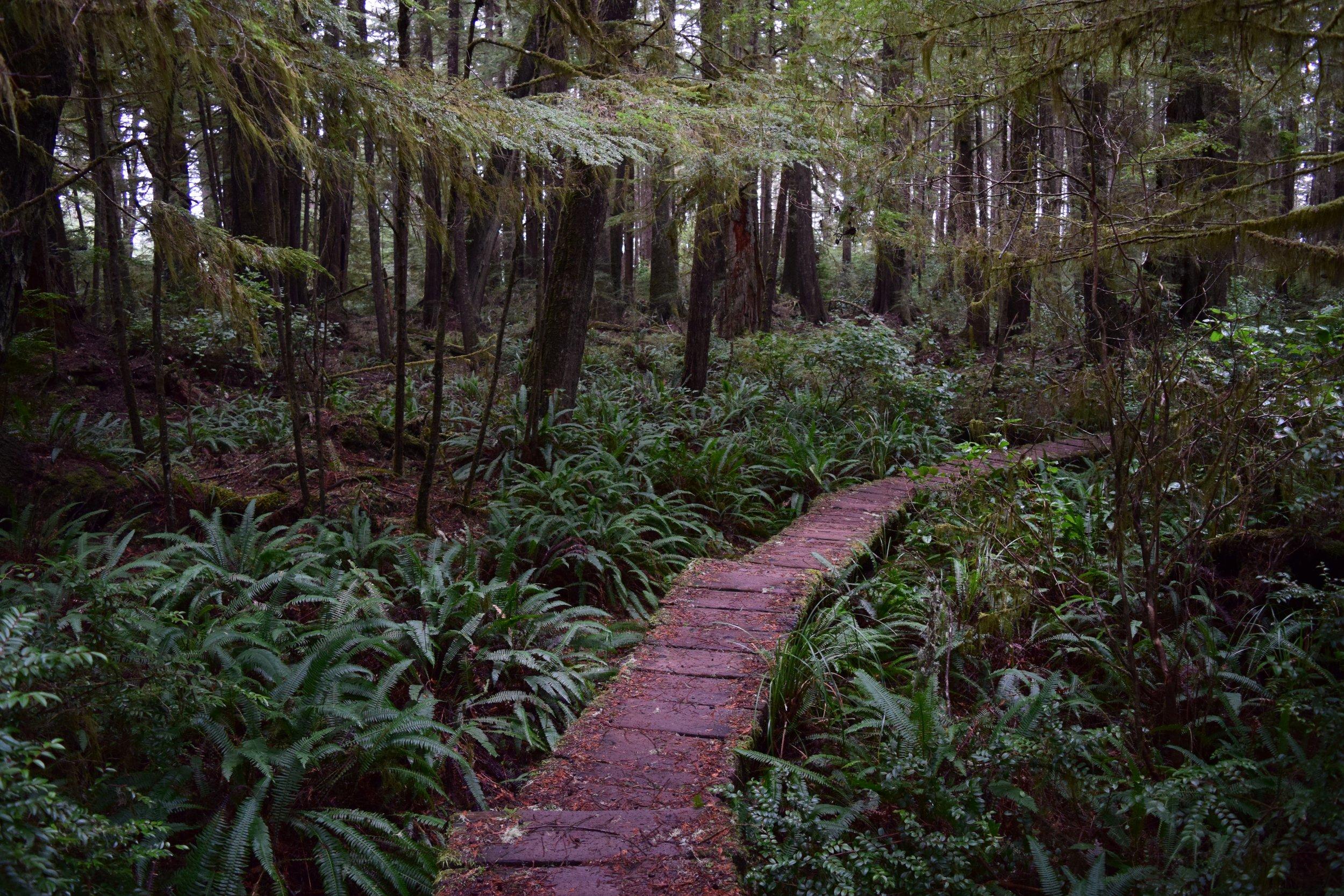 Ozette Boardwalk Trail.jpg