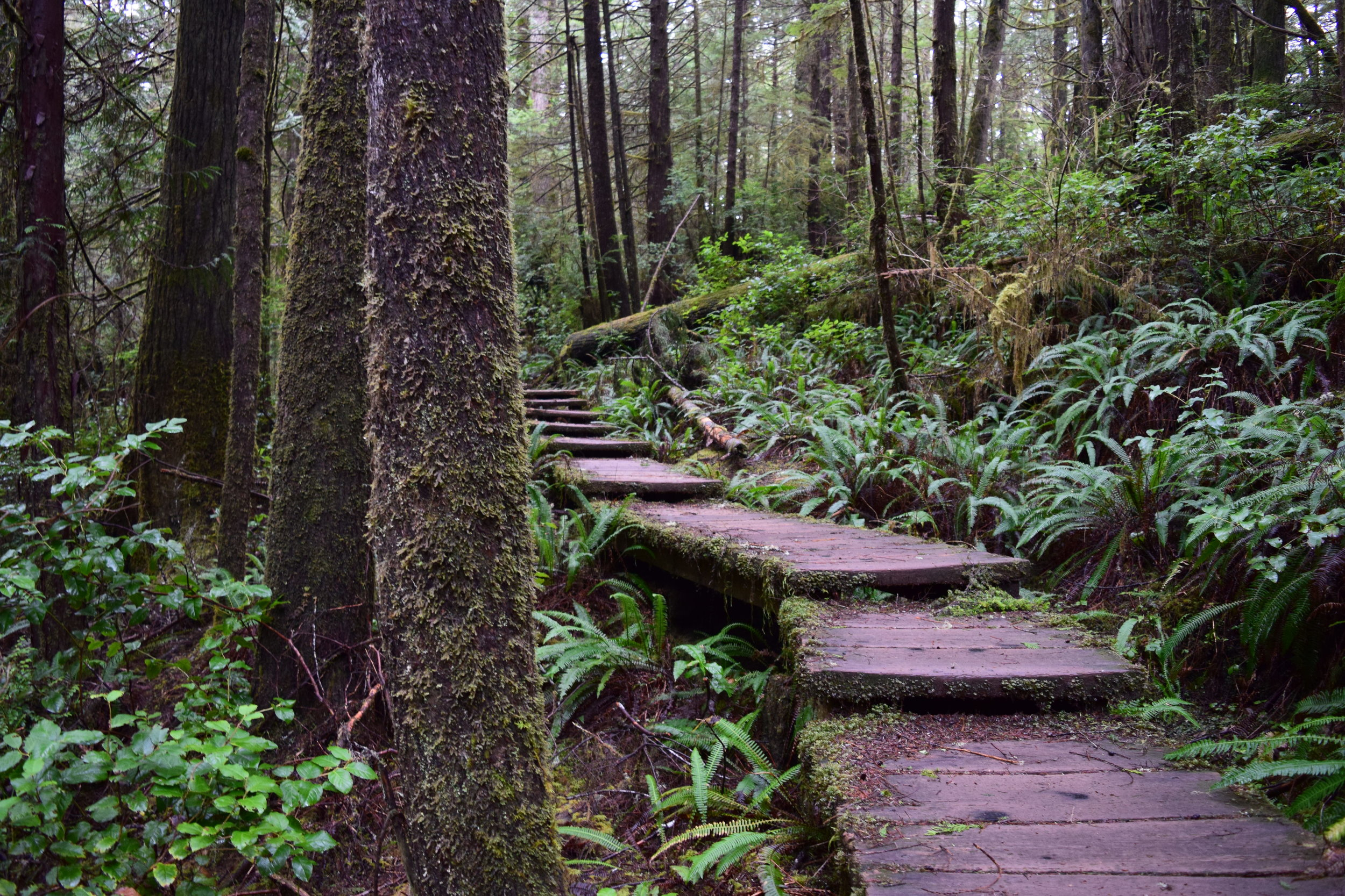 1 - Boardwalk Trail to Cape Alava.jpg