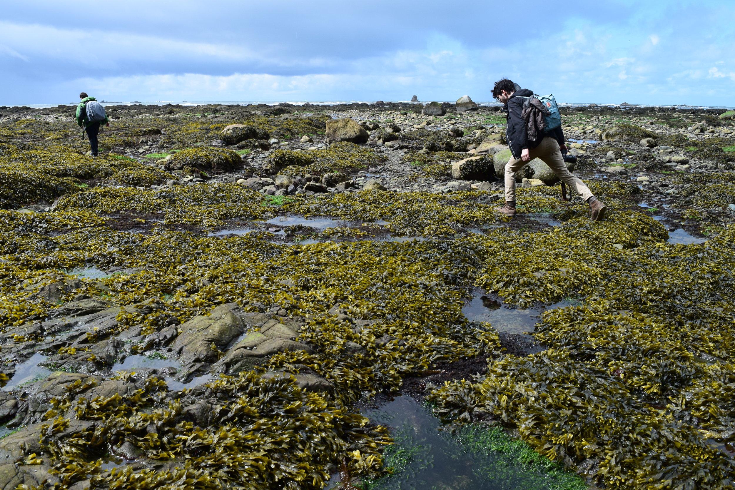 4 - Low Tide Coastal Trek.jpg