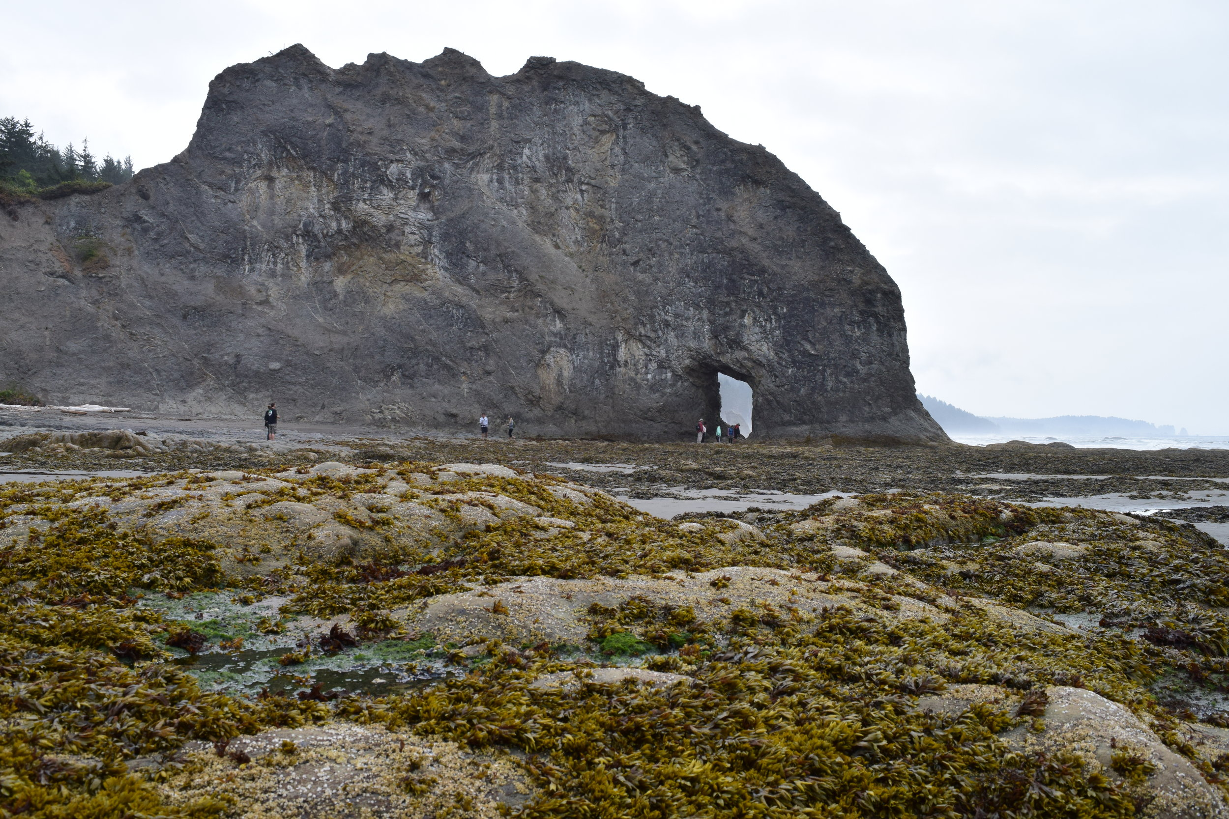 Rocky, rugged low tide terrain