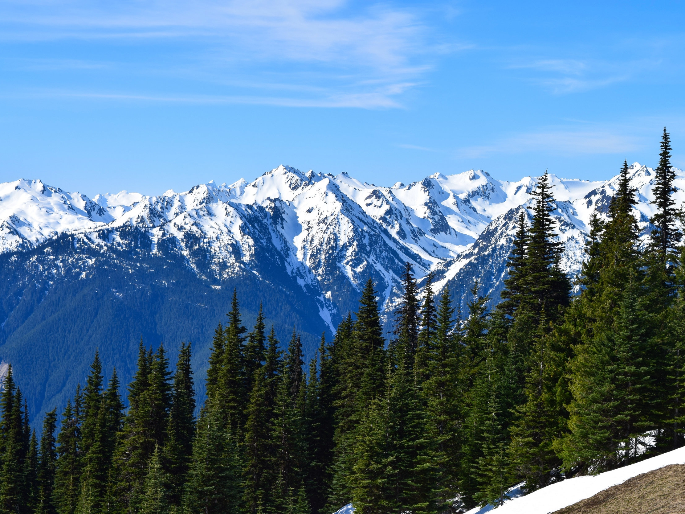 Hurricane Ridge.jpg