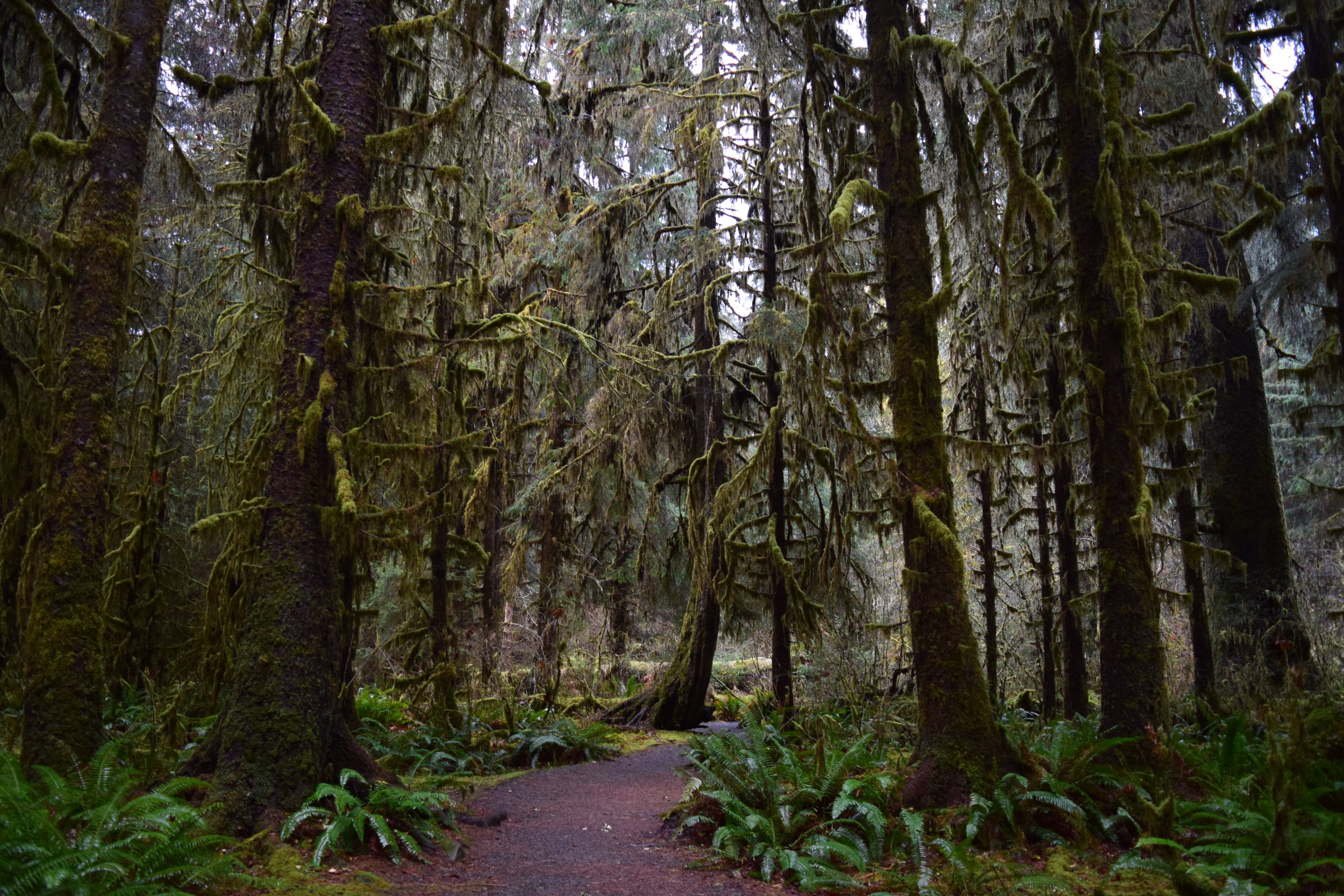Spruce Nature Trail.jpg