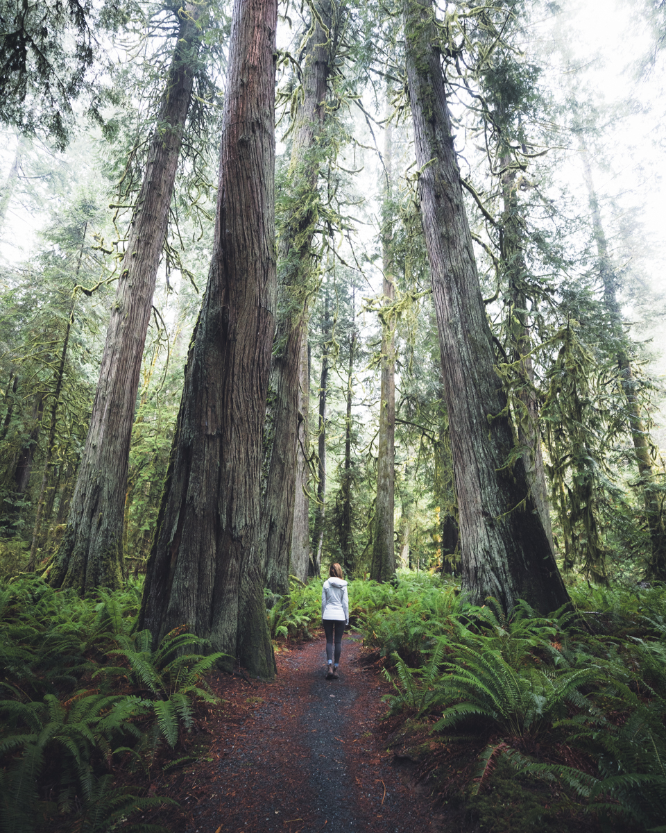 Lake Crescent Forest