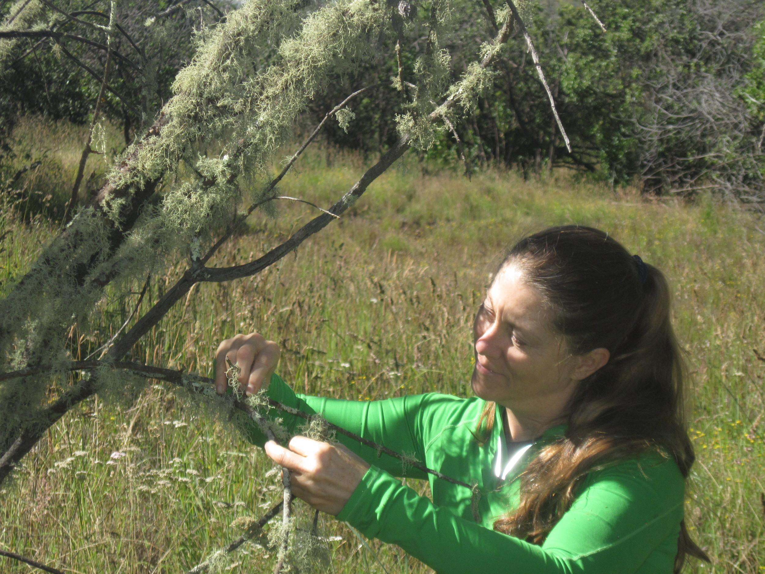 LiveLifeWellMEDICINE Dr. Margaret Dexter usnea lichen