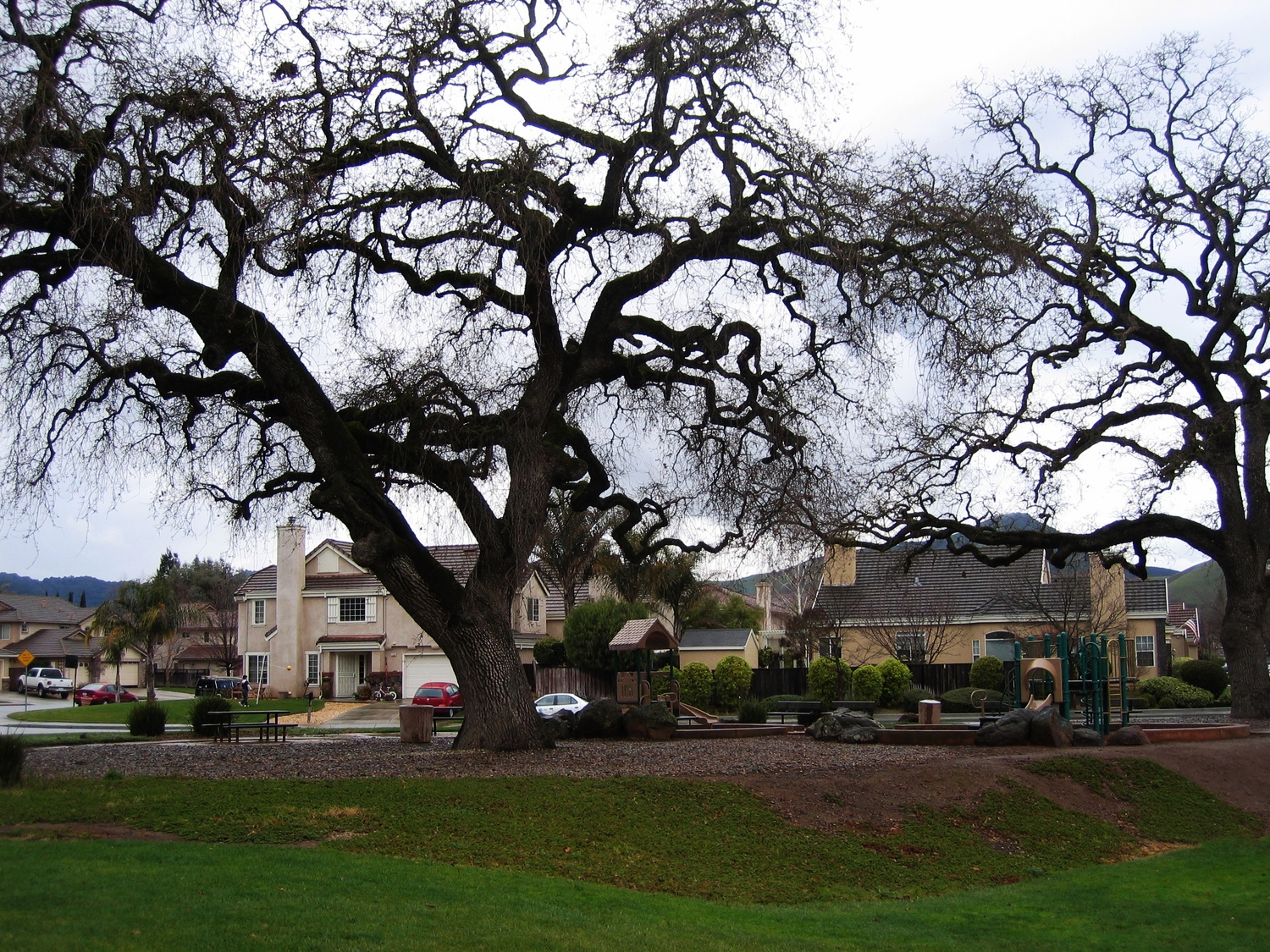 "Valley Oaks persist and remain resilient to development and other stressors. SFEI proposes a strategy to ""re-oak"" the landscape in Napa."