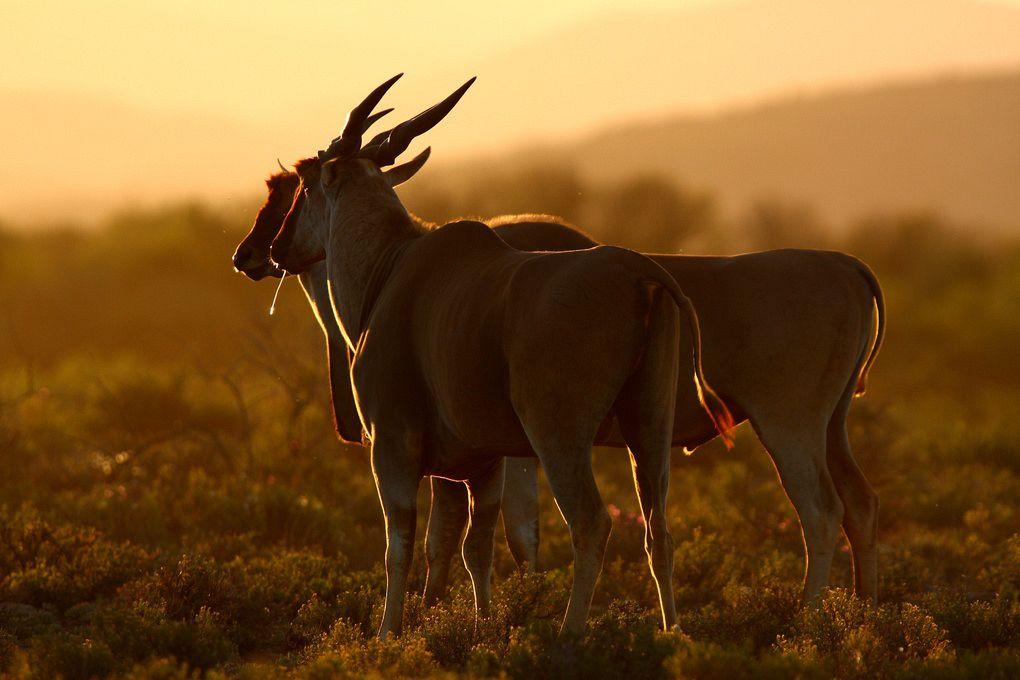 gallery-34-311-sanbona-wildlife-71-min.jpg