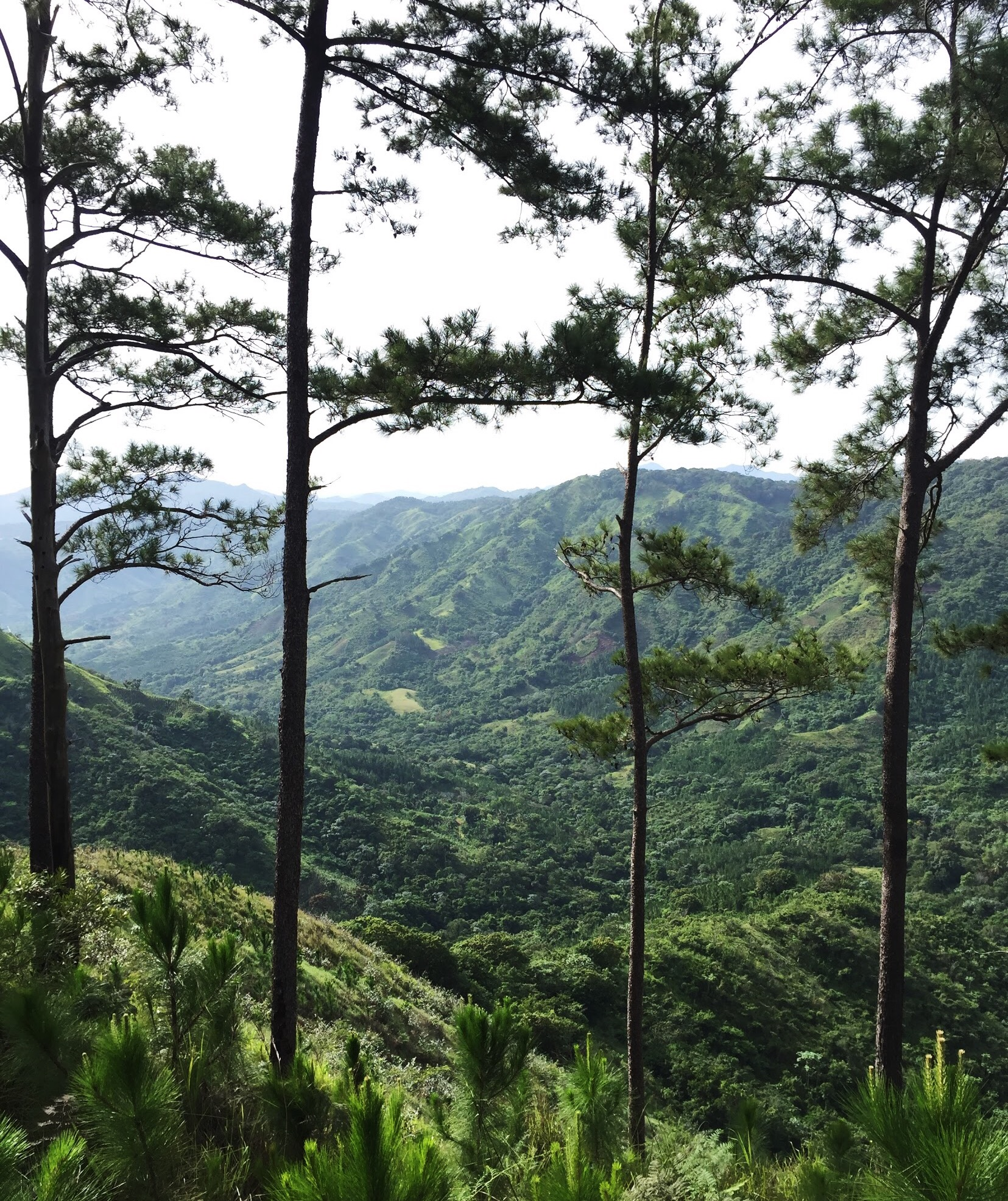 holarita-loma-montana