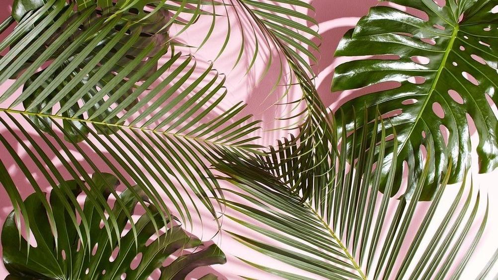 holarita_pink_palms