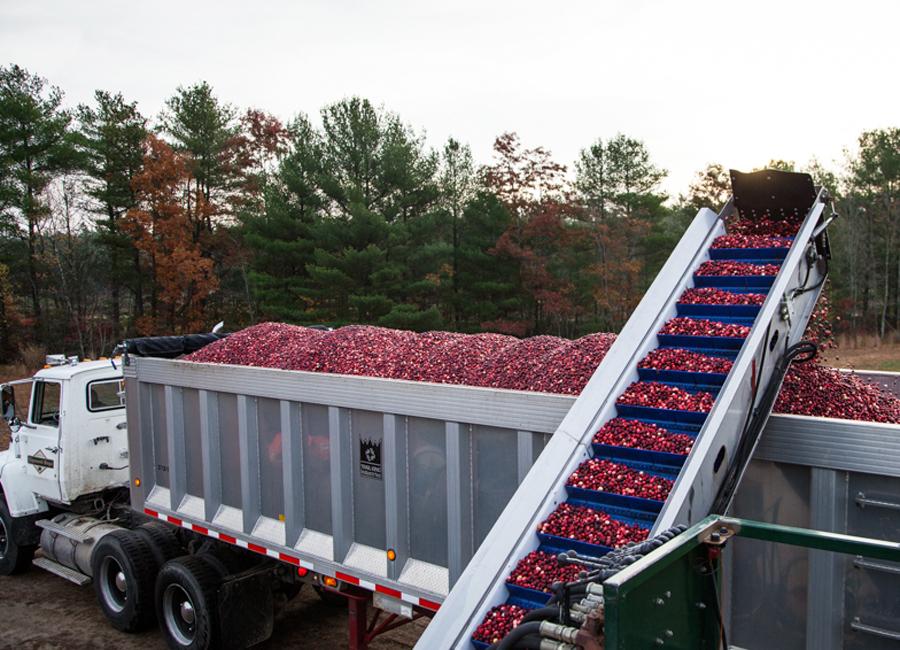 cranberries-2.jpg