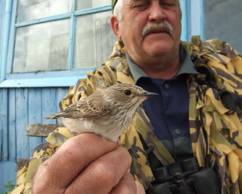 kazakhstan-bird-banding