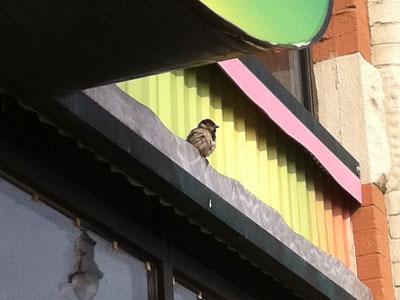 bill-sparrow