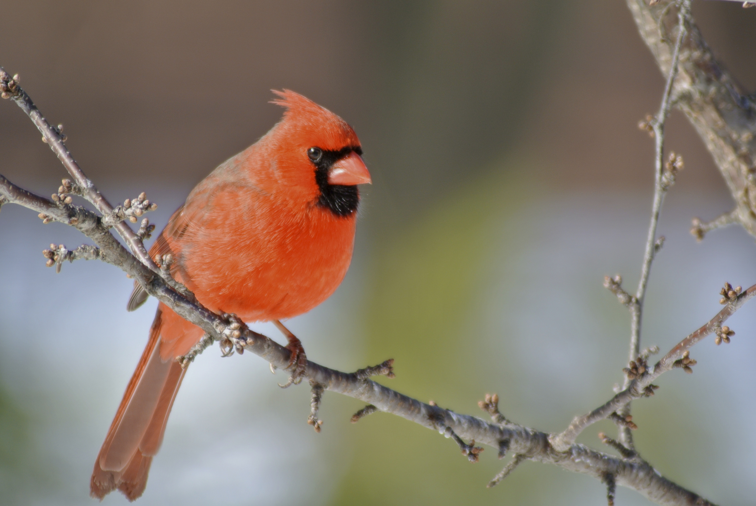 If you've ever enjoyed a cardinal, an oriole or ever noticed awarbler, please make the call or email.
