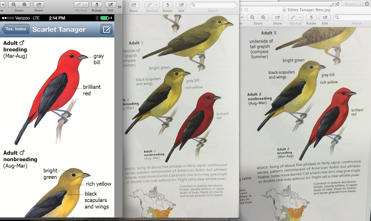 Scarlet tanager comparison from left to right: screen shot of Sibley iPhone app (first edition), Sibley Second Edition first printing, Sibley Second Edition second printing.