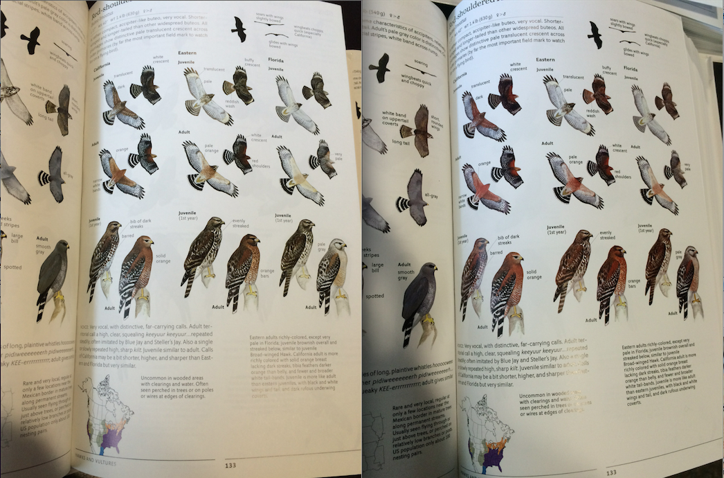 Here's a comparison of the red-shouldered hawk page of the Second Edition Sibley: first printing on the left, second printing on the right. An improvement!