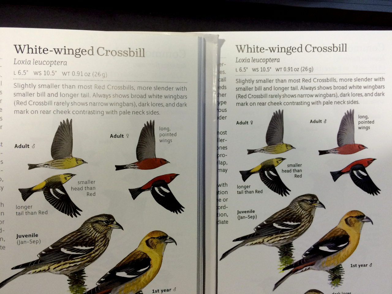 Typos like the white-winged crossbill sex mixup have been addressed as well. First printing on the left, second printing on the right.