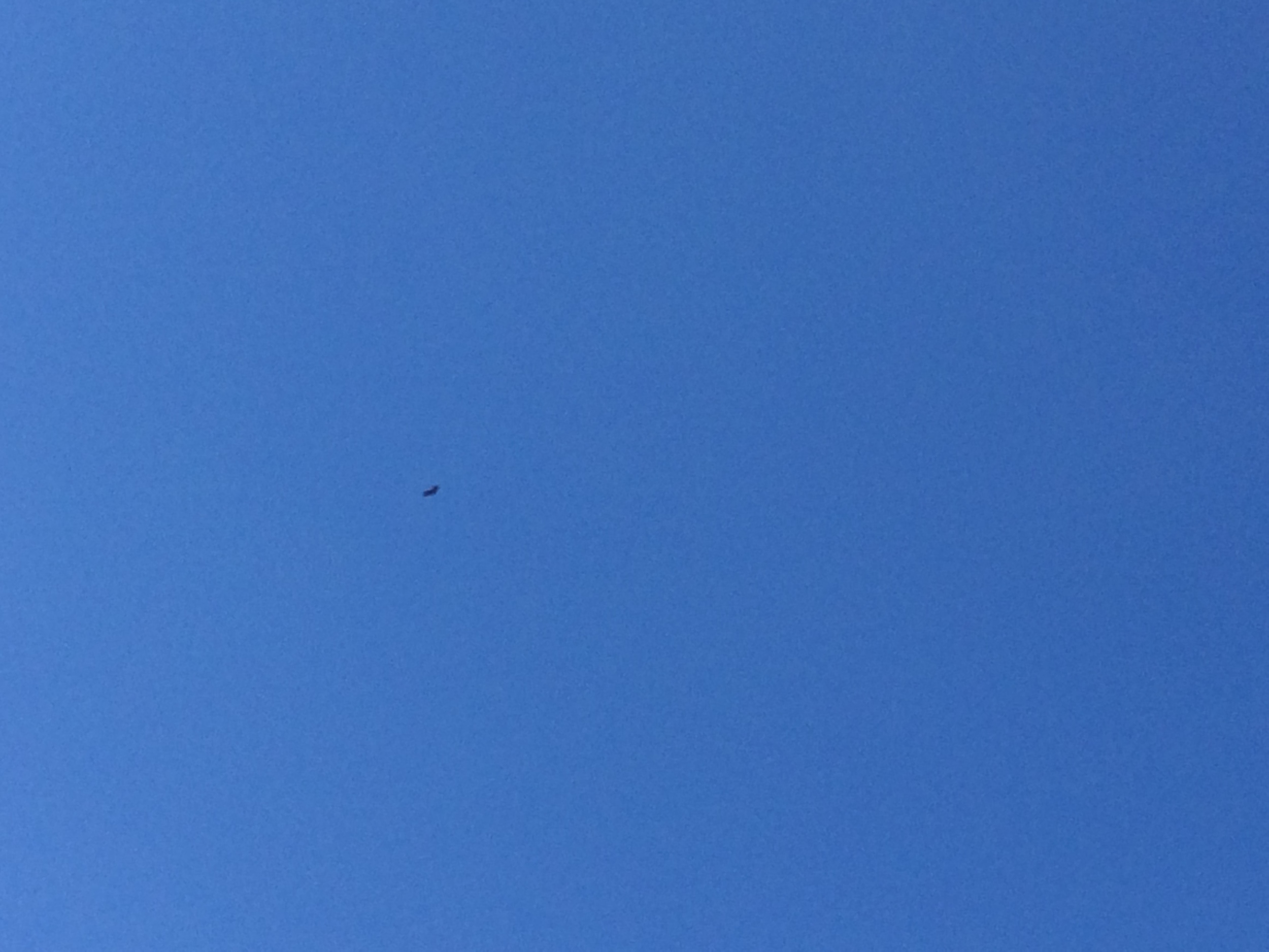 If you look close you can make out that the black speck is a California condor.