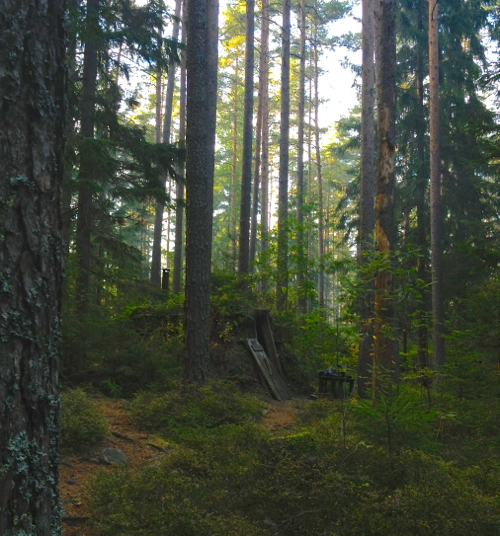 Kolarbyn  is known as Sweden's most primitive hotel. Seriously, check their website, that's how they bill themselves. Can you make out our hut hidden in the Swedish wildnerness?