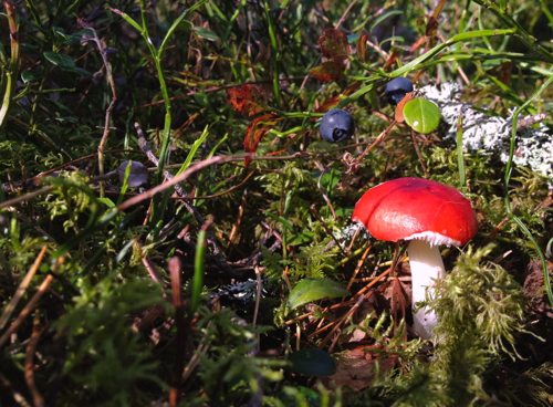 The ground beneath us was moss, berries and mushrooms. Pro tip: don't eat the red capped mushroom.
