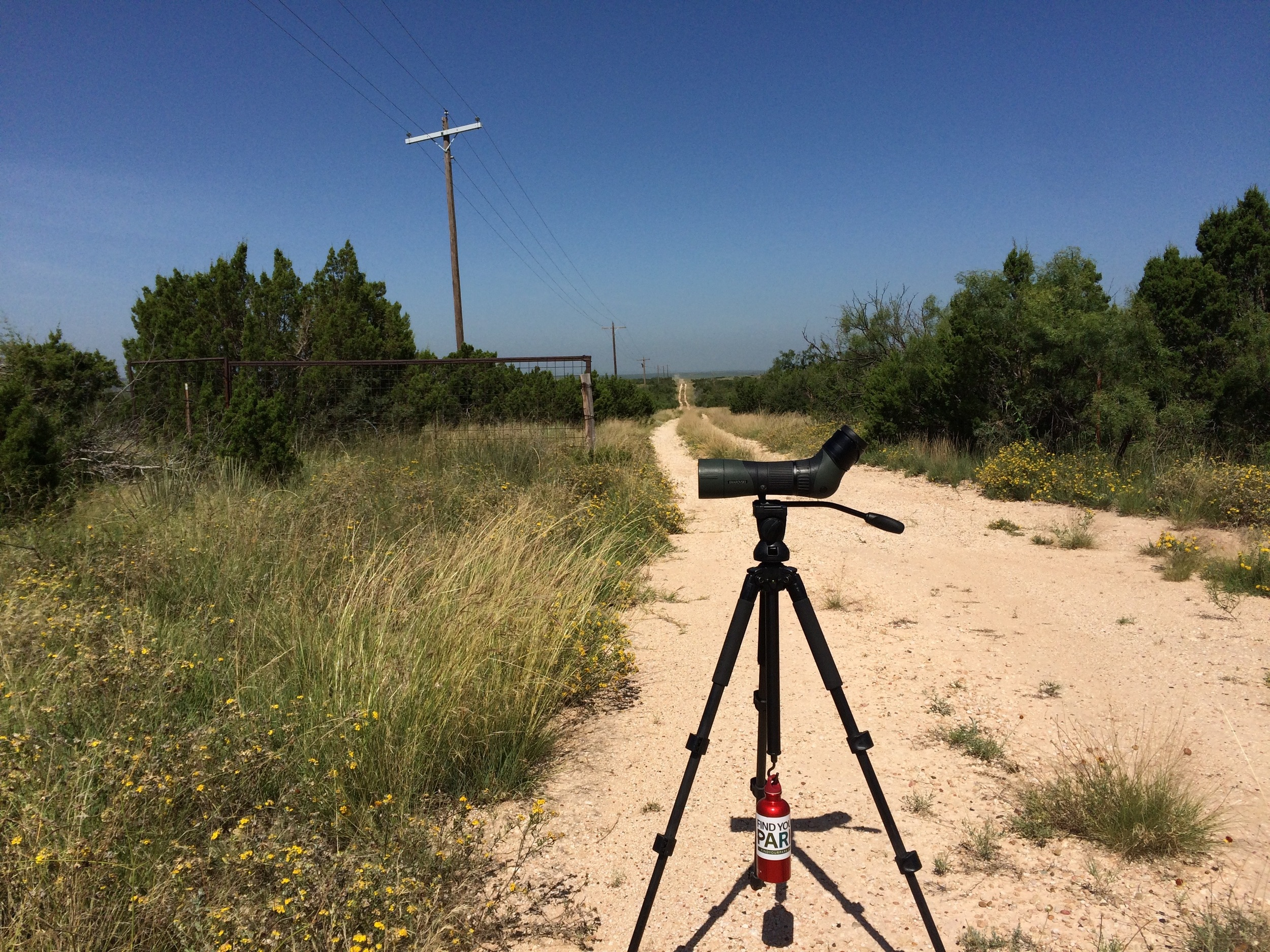 One of my bird survey offices in Texas.