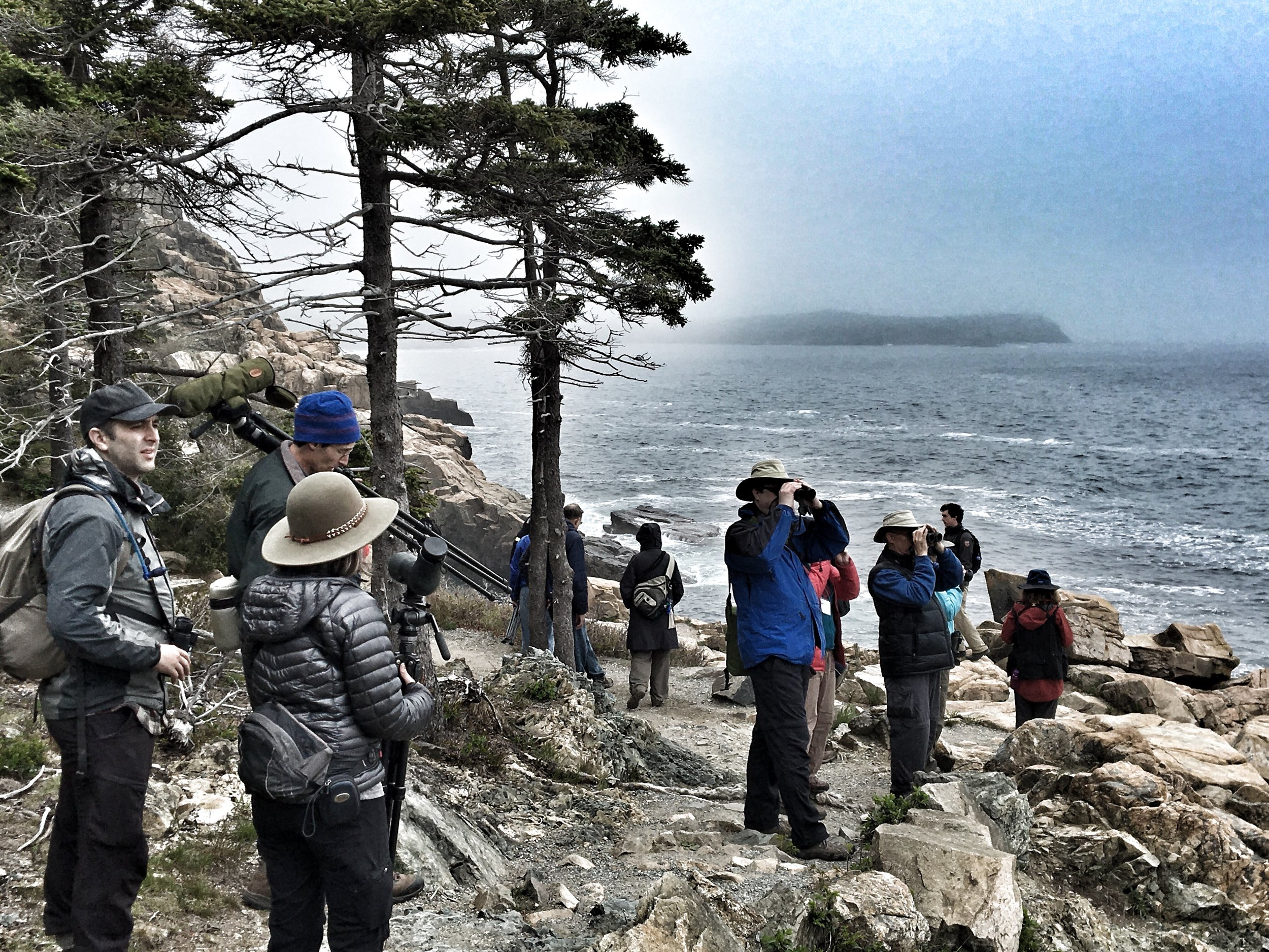 This could be you at next year's  Acadia Bird Festival .