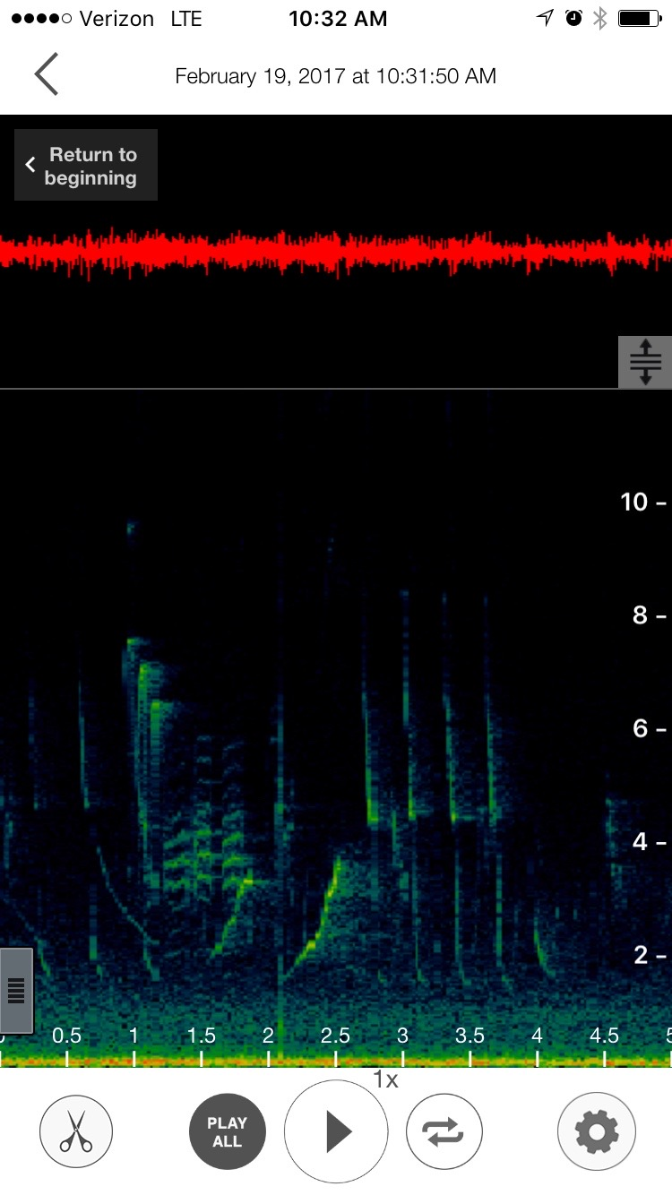 What the Song Sleuth looks like in recording mode. The key to using this app is understanding the spectrogram of the bird songs.