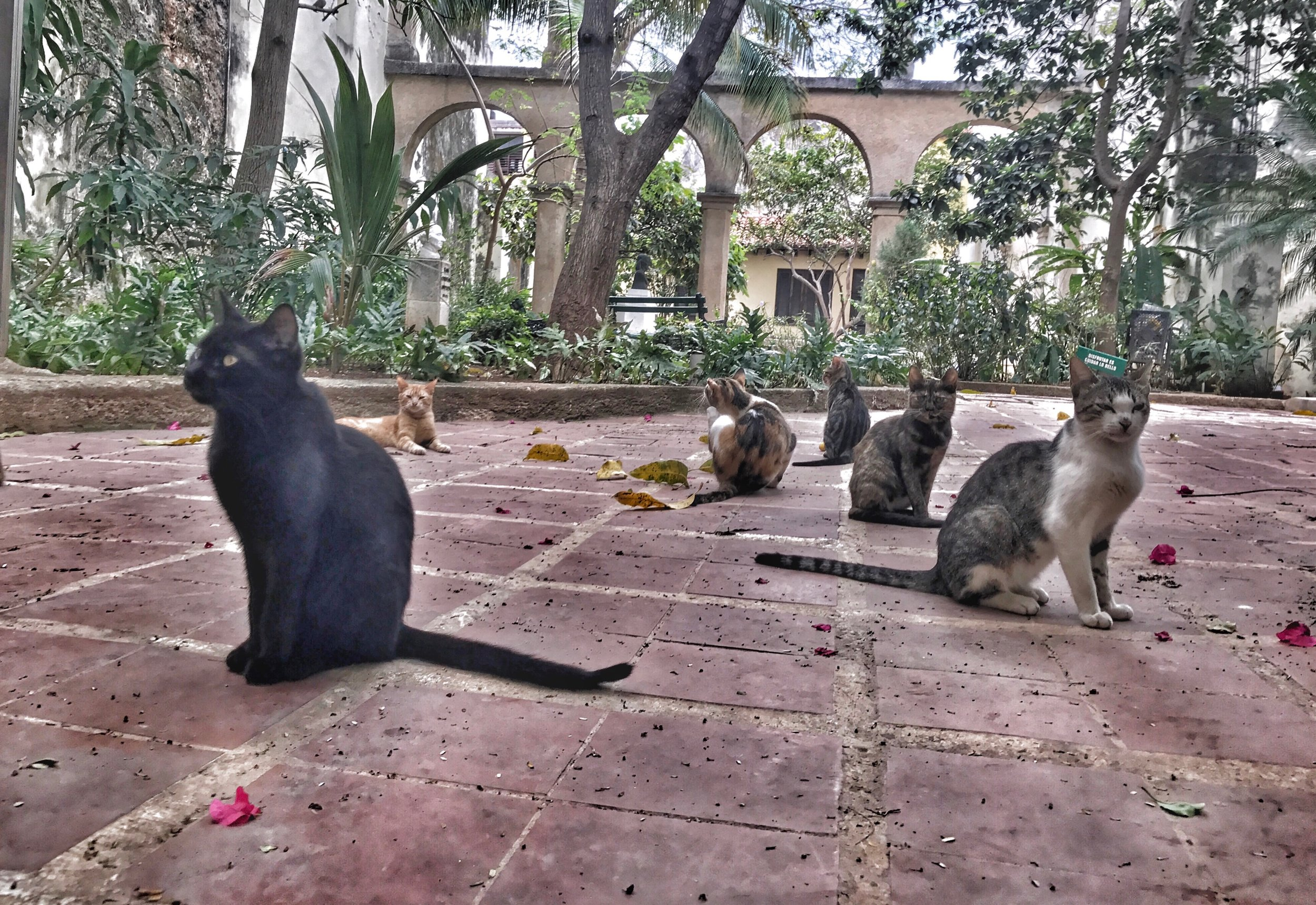 The many feral cats of Havana. These felines looked like they were about to drop the most epic indy album you've ever heard. The cats were active during the day but disappeared at night when the dogs were active.