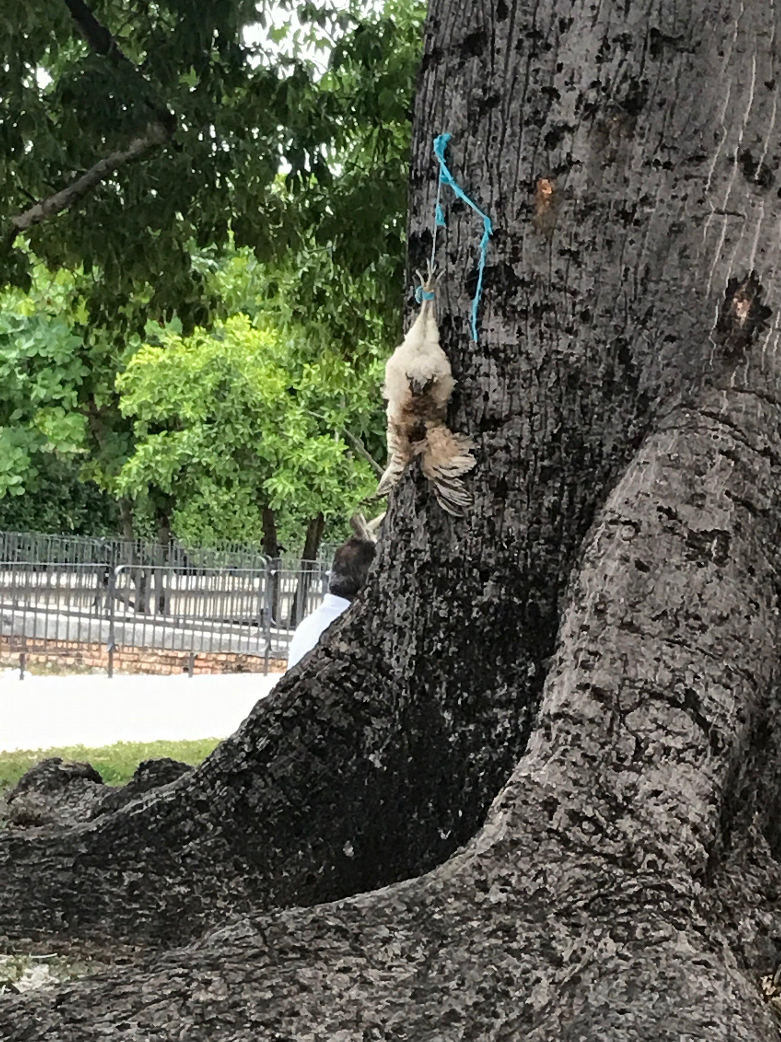 We saw evidence of Santería being practiced around Havana like this chicken sacrifice.