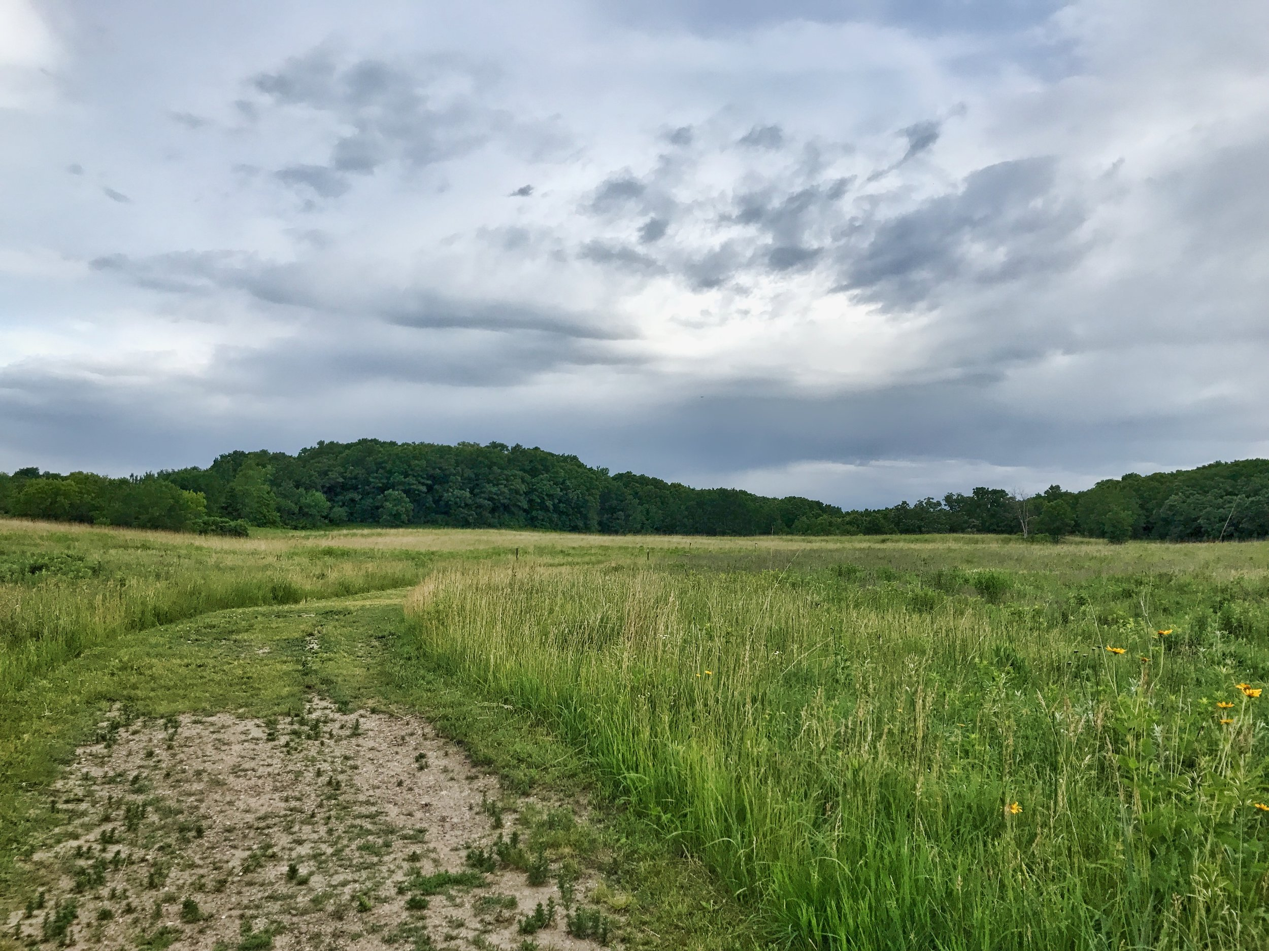Prairie area around Richardson Nature Center.