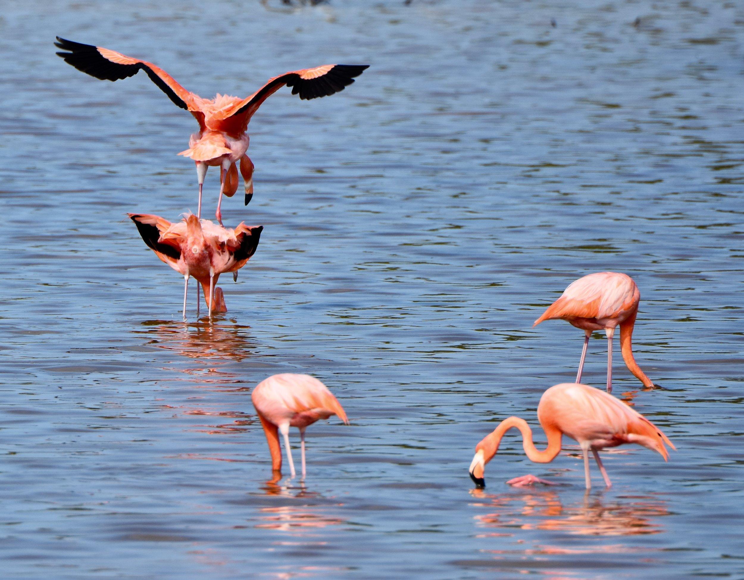 Look at that shiny flamingo cloaca!